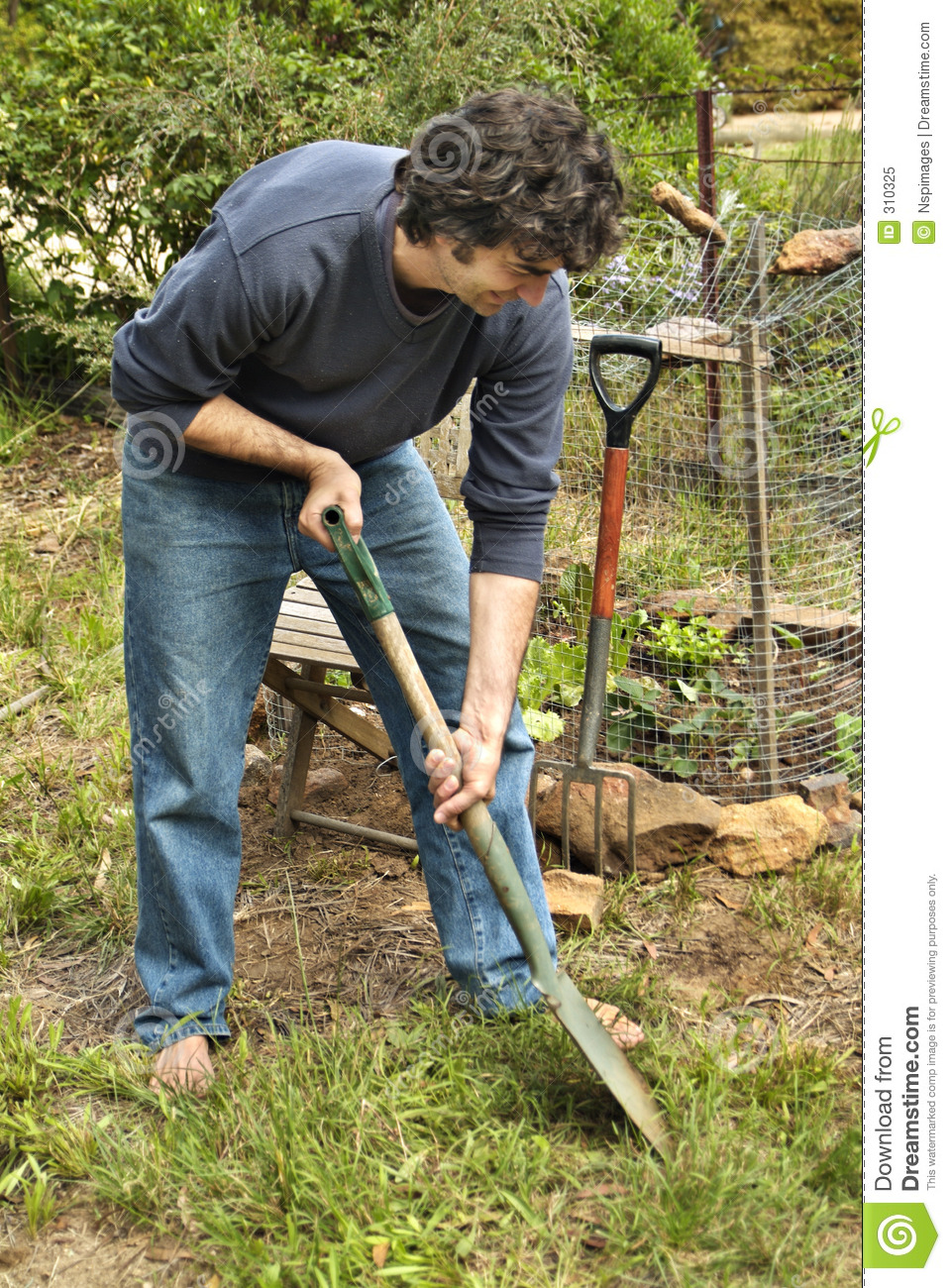 Man in vegetable patch