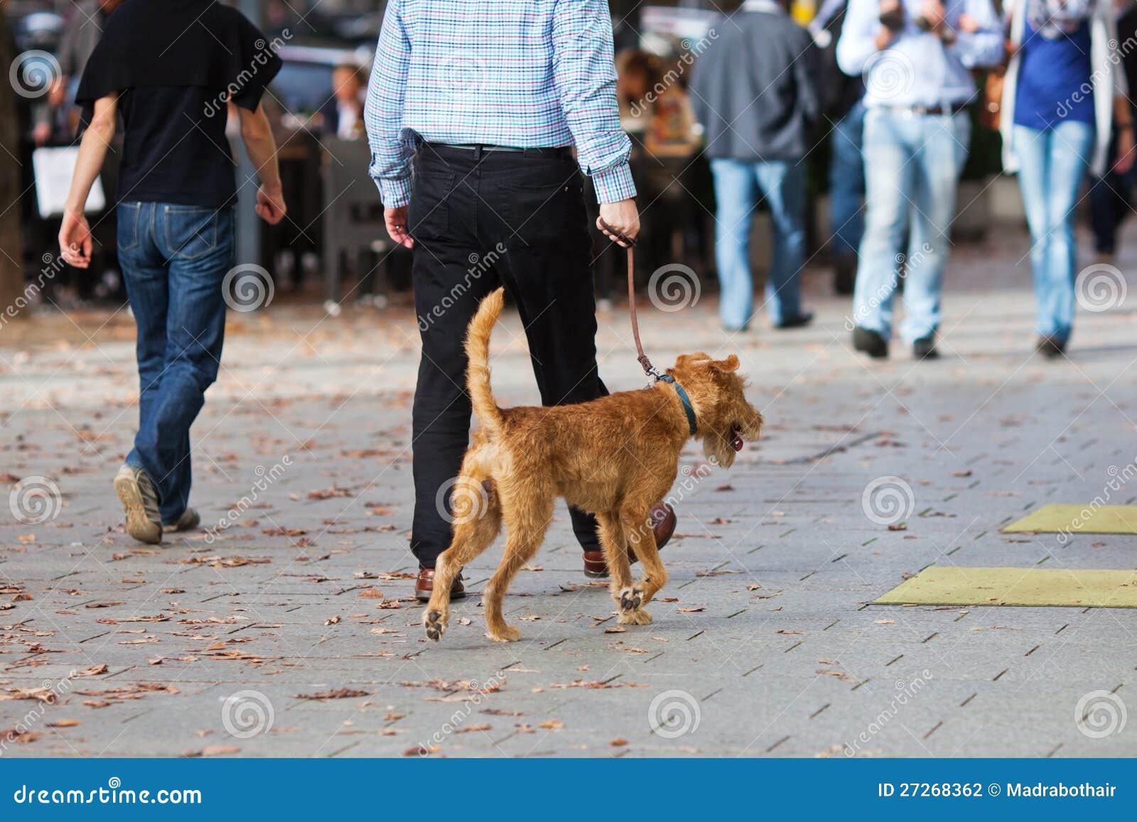 Man Walking Dog : Man walking a dog in the city stock photo image