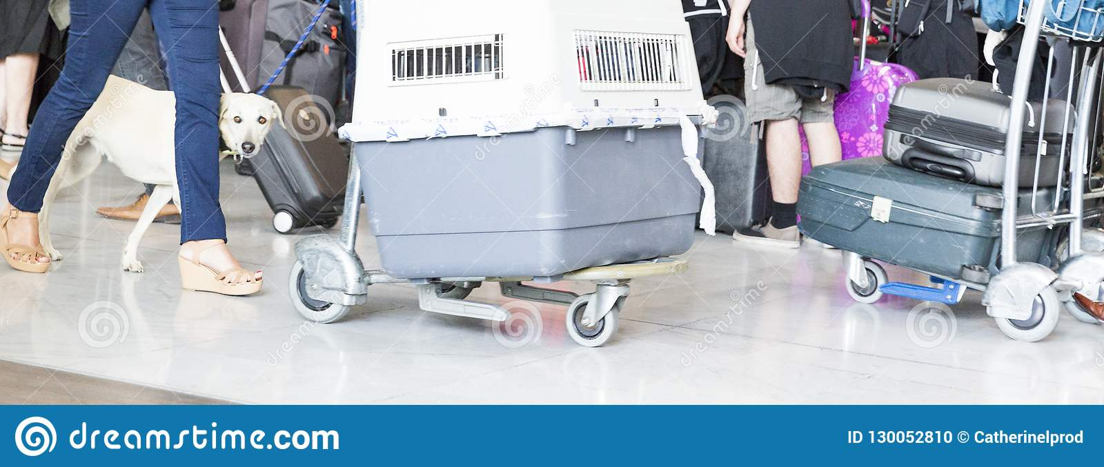Man walking suitcase luggage bag and dog box on trolley in the airport.