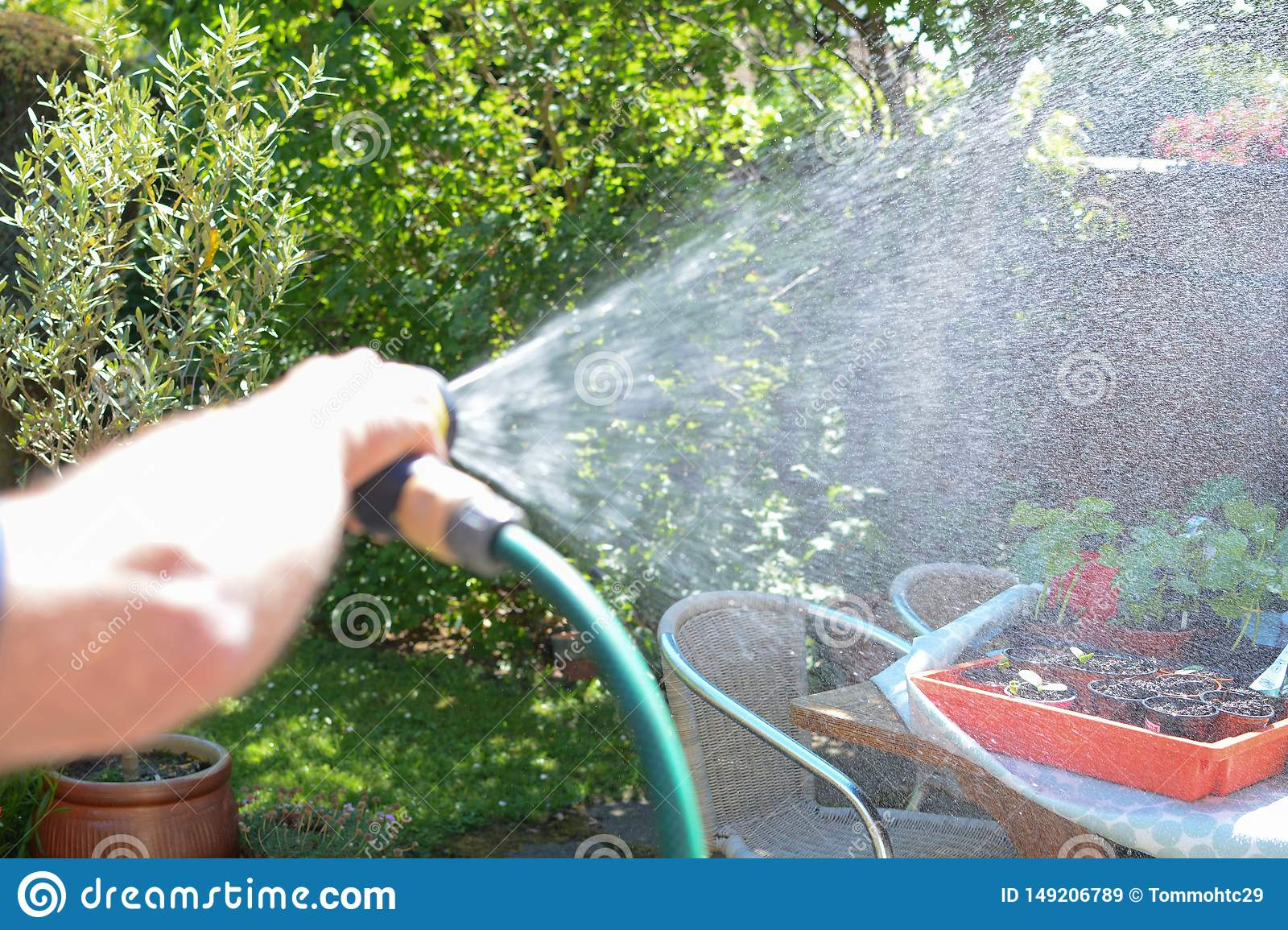 Man watering the garden with a sprinkler hose on a sunny day