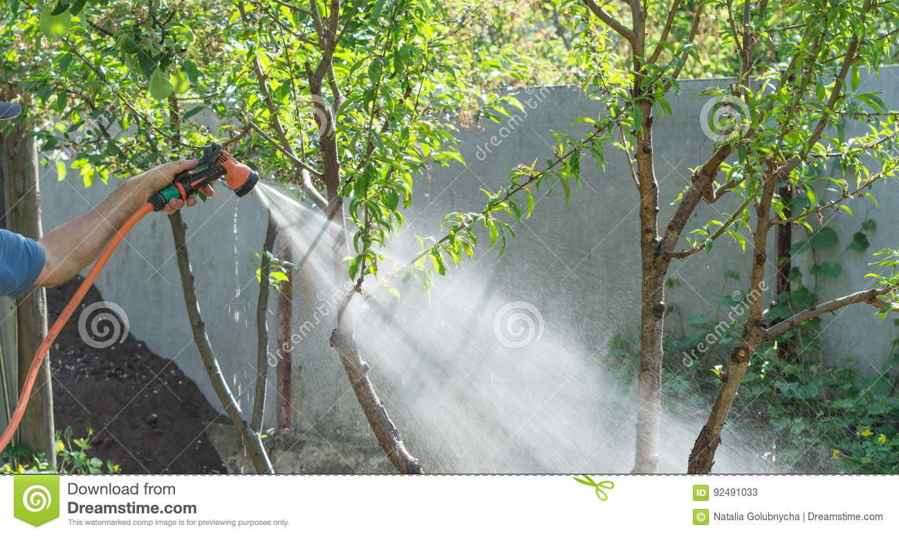 Man watering from a hose plants in the garden