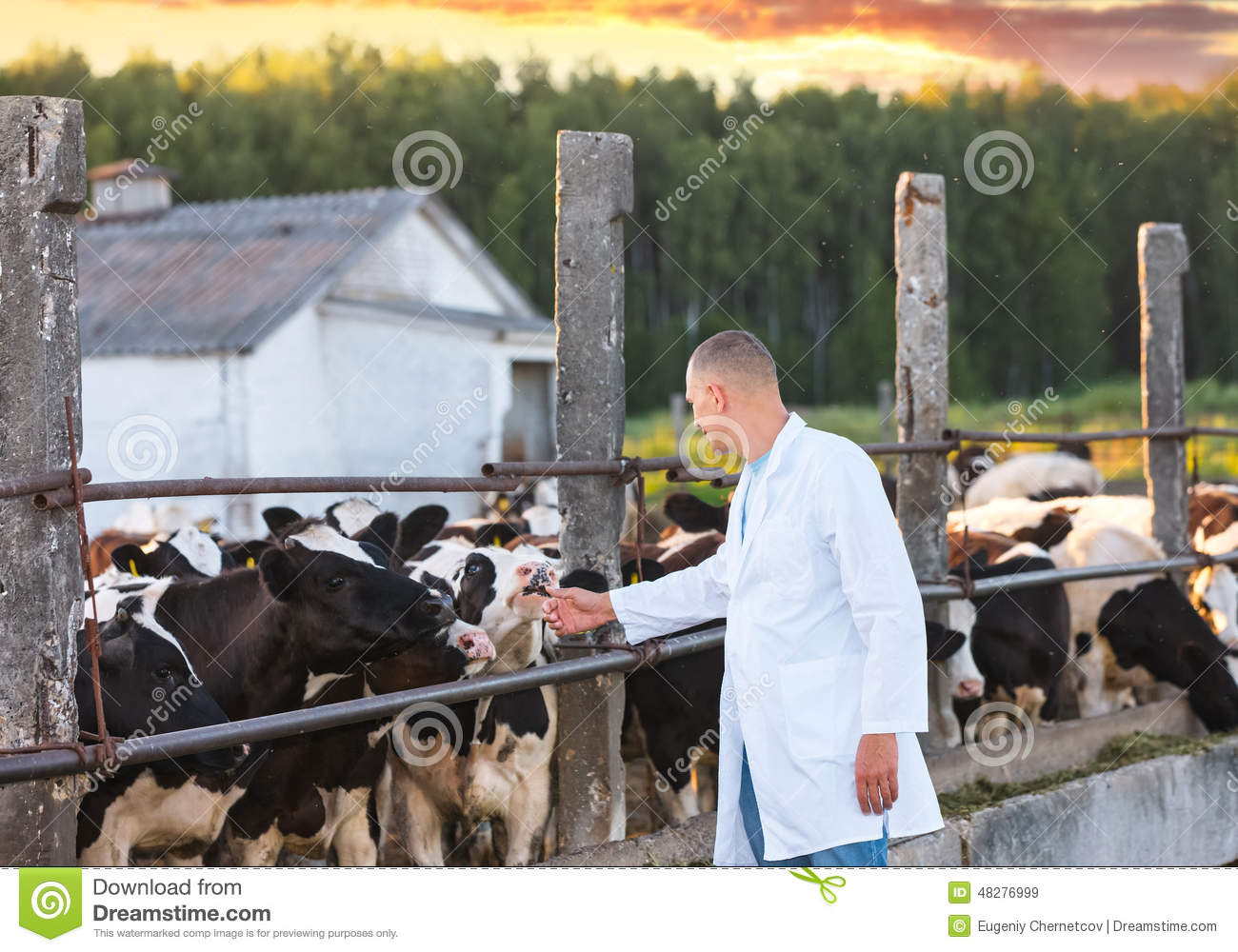 Man in a white coat on cows farm