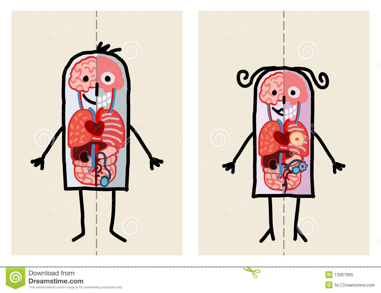 Man Woman Anatomy Stock Vector Illustration Of Lungs 13307865