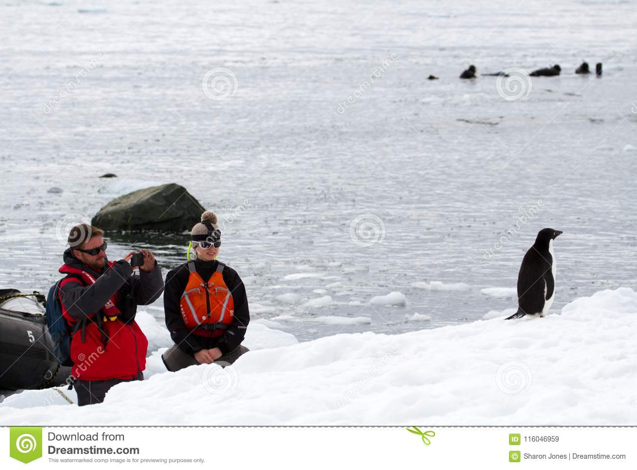 A man and a woman watching and taking a photograph of an Adelie Penguin Pygoscelis adeliae while a group of people