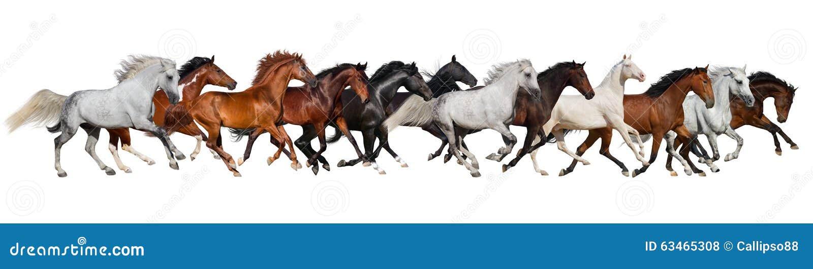 Manada del caballo aislada