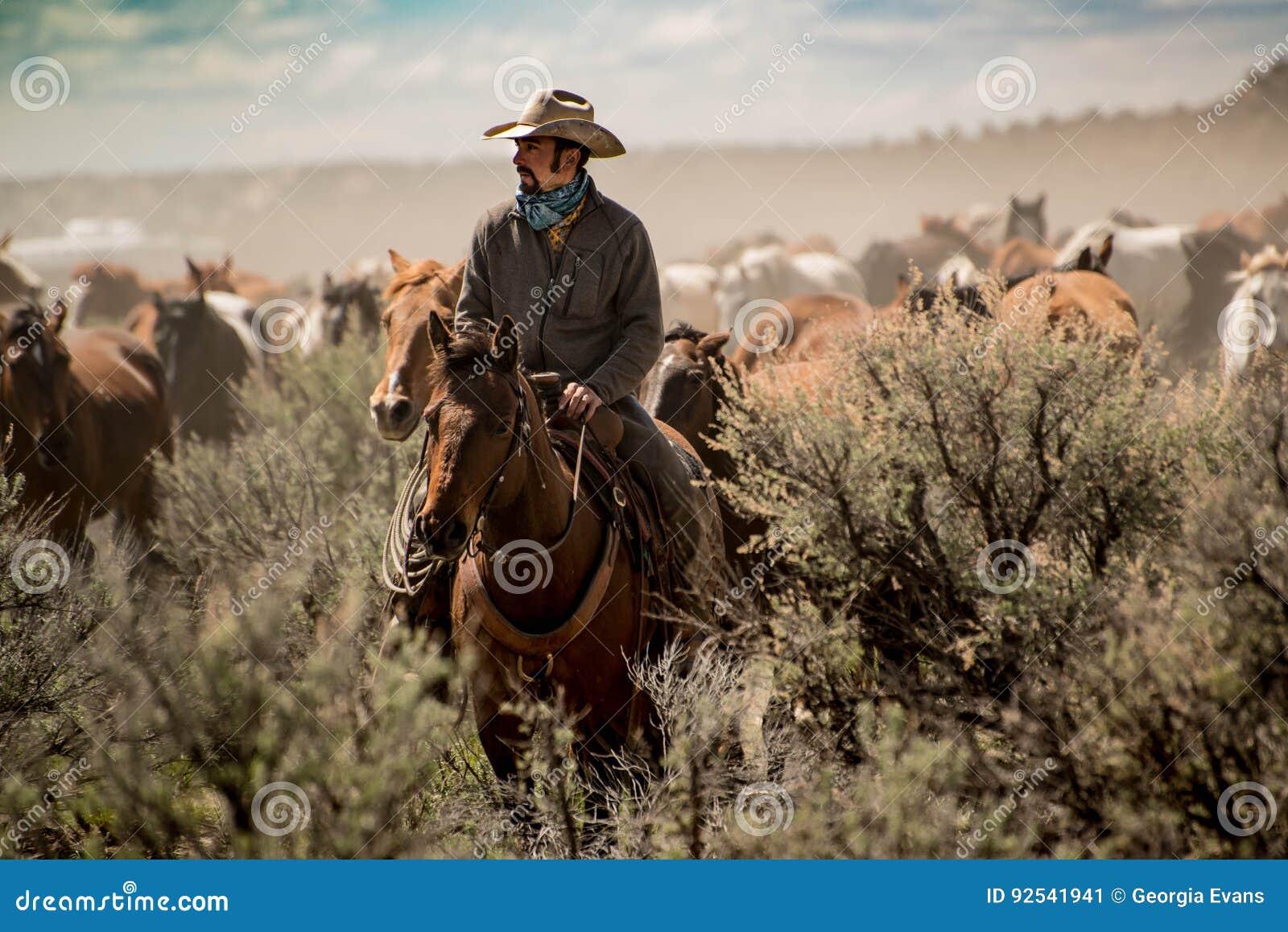 Manada principal del caballo del vaquero a través del polvo y cepillo sabio durante rodeo