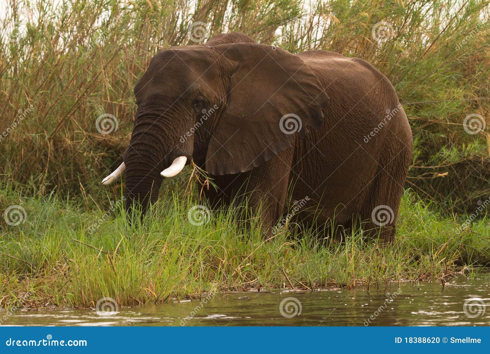 Manaen pools safari