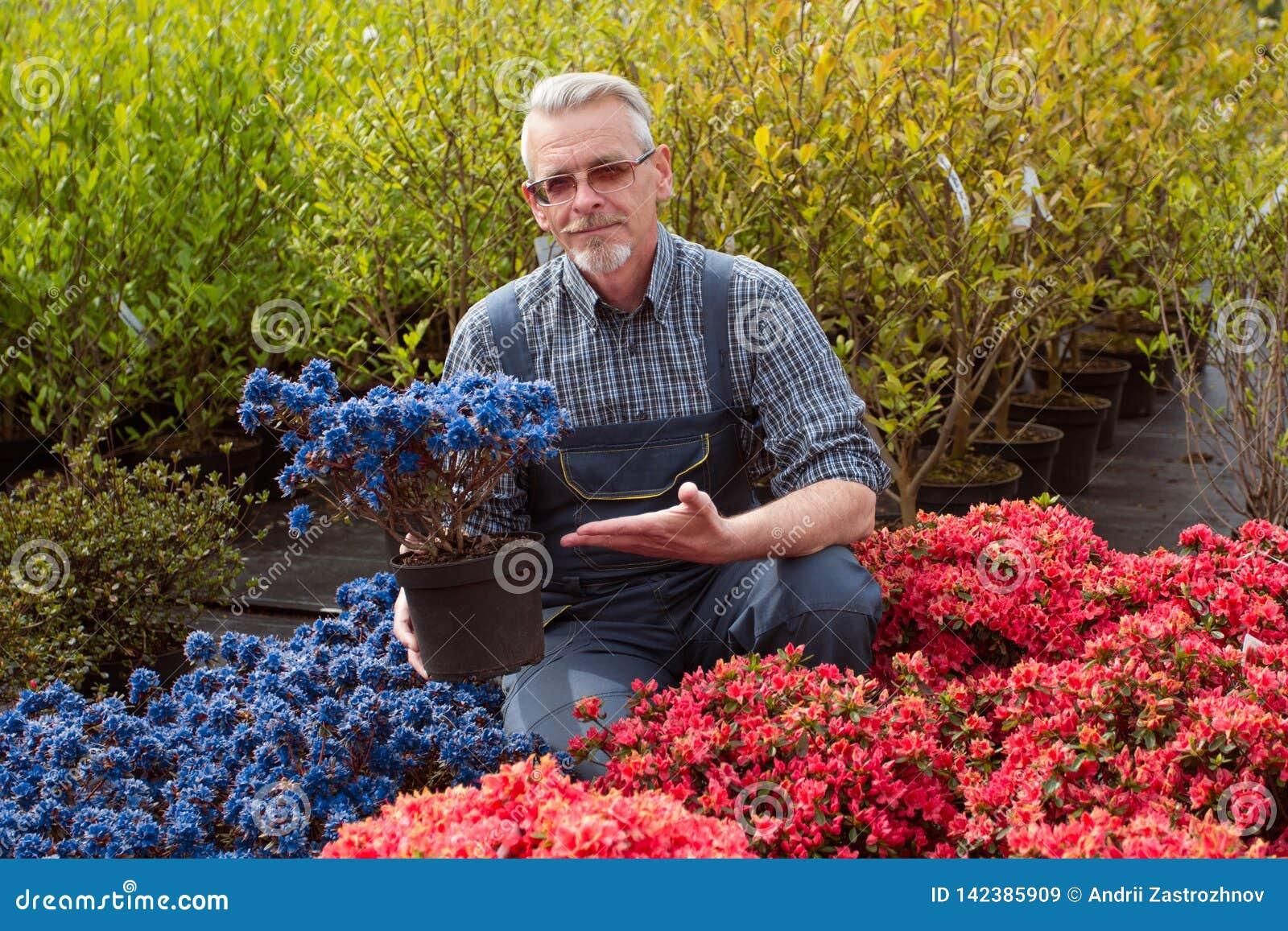 Managergarten-center nahe dem Geschäftsfenster mit Blumen Er hält einen Blumentopf