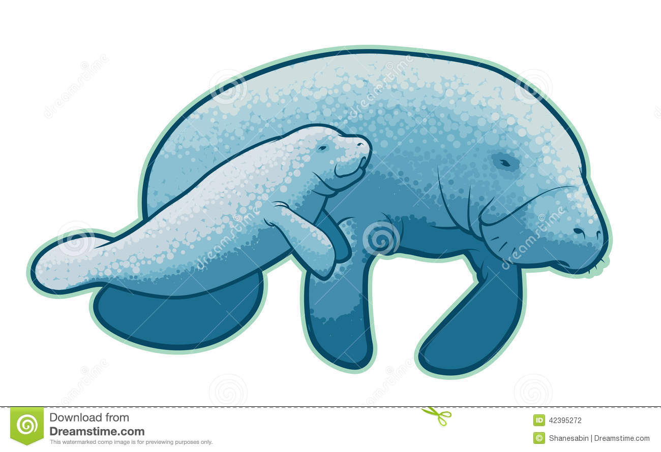 Manatees Stock Vector - Image: 42395272