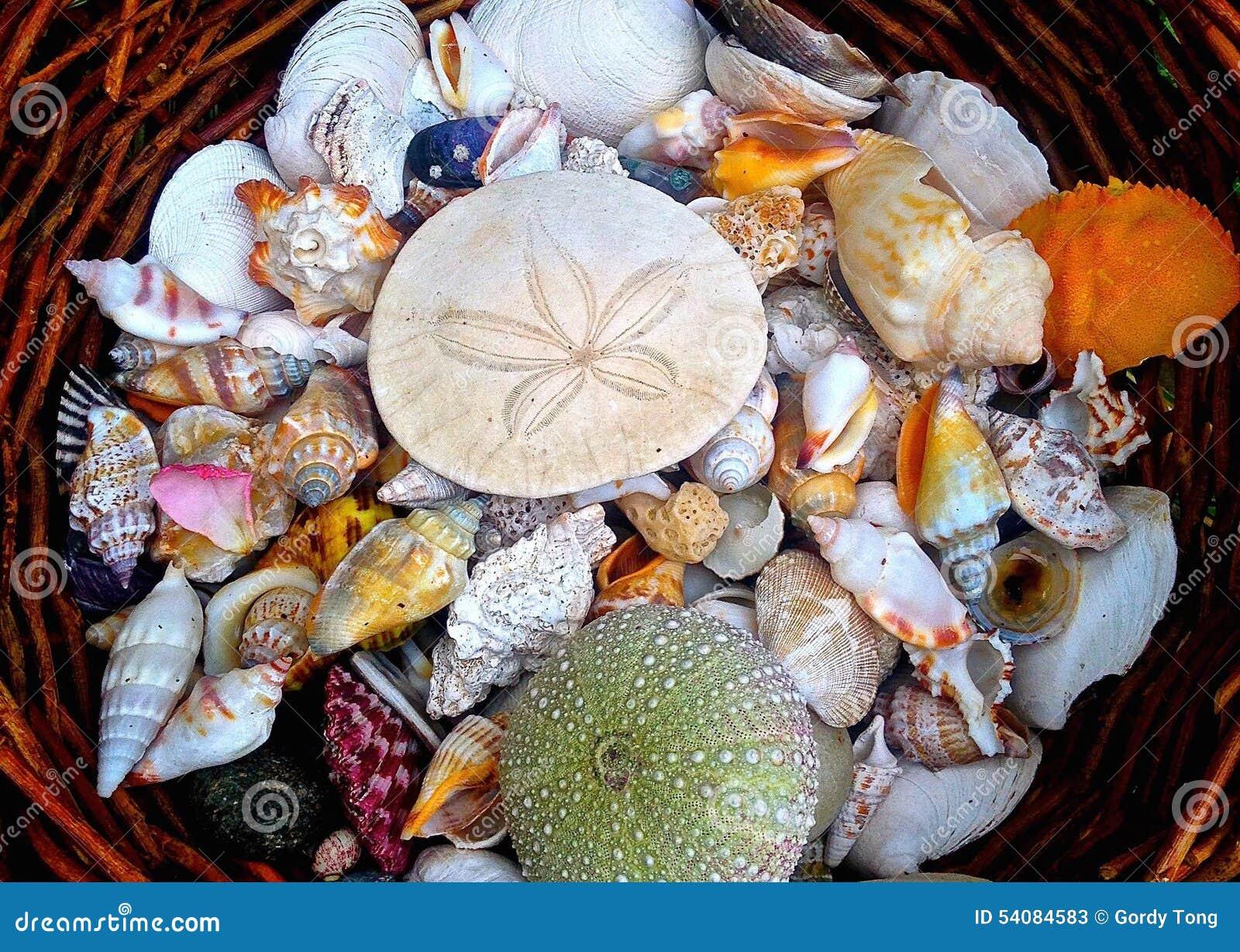 Mand van shells in tuin