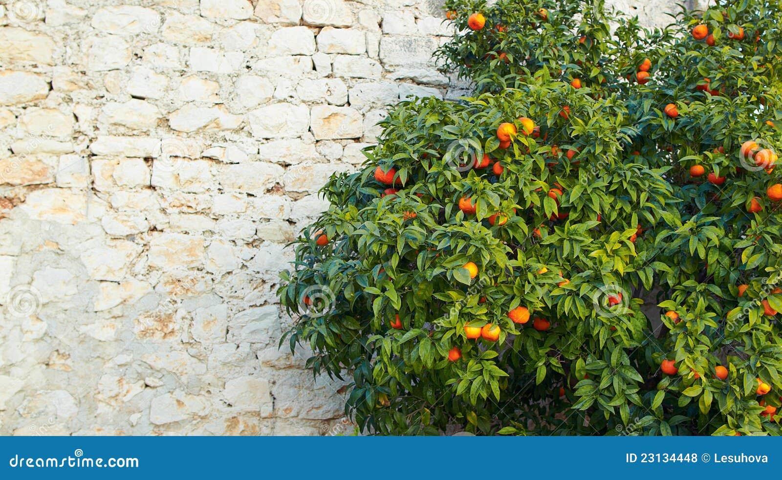 Image Result For Mandarin Garden