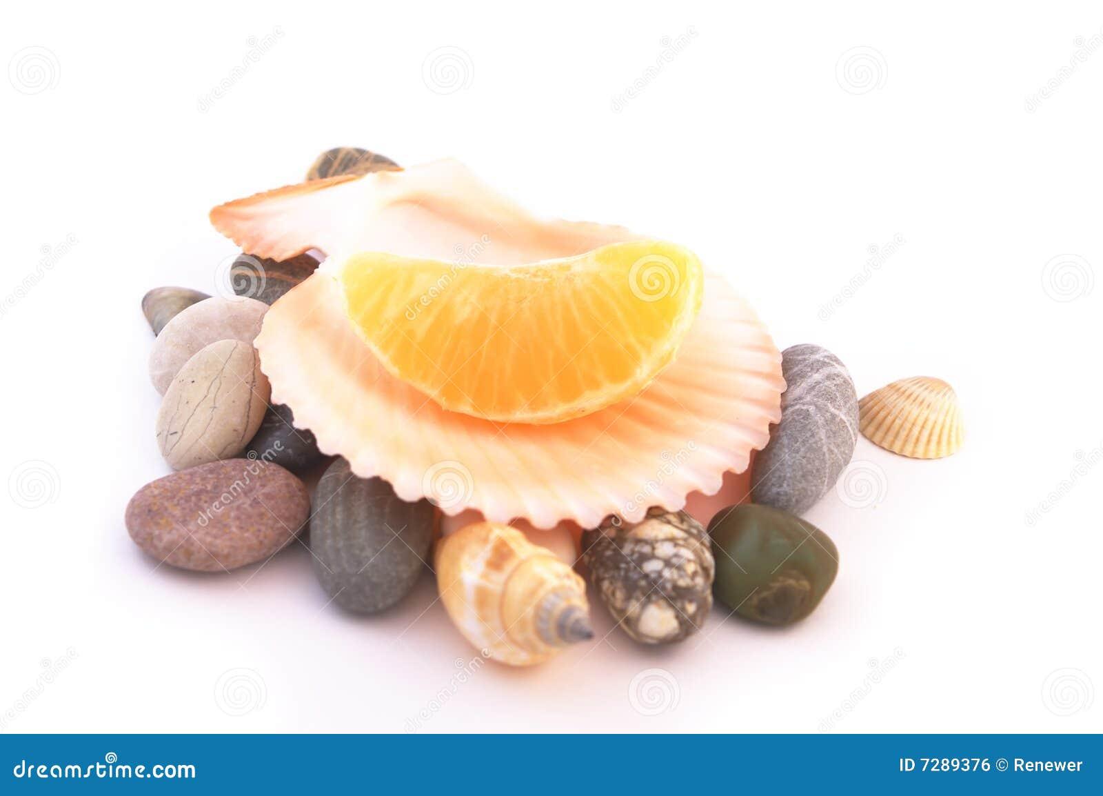 Mandarina en el shell del mar aislado en blanco