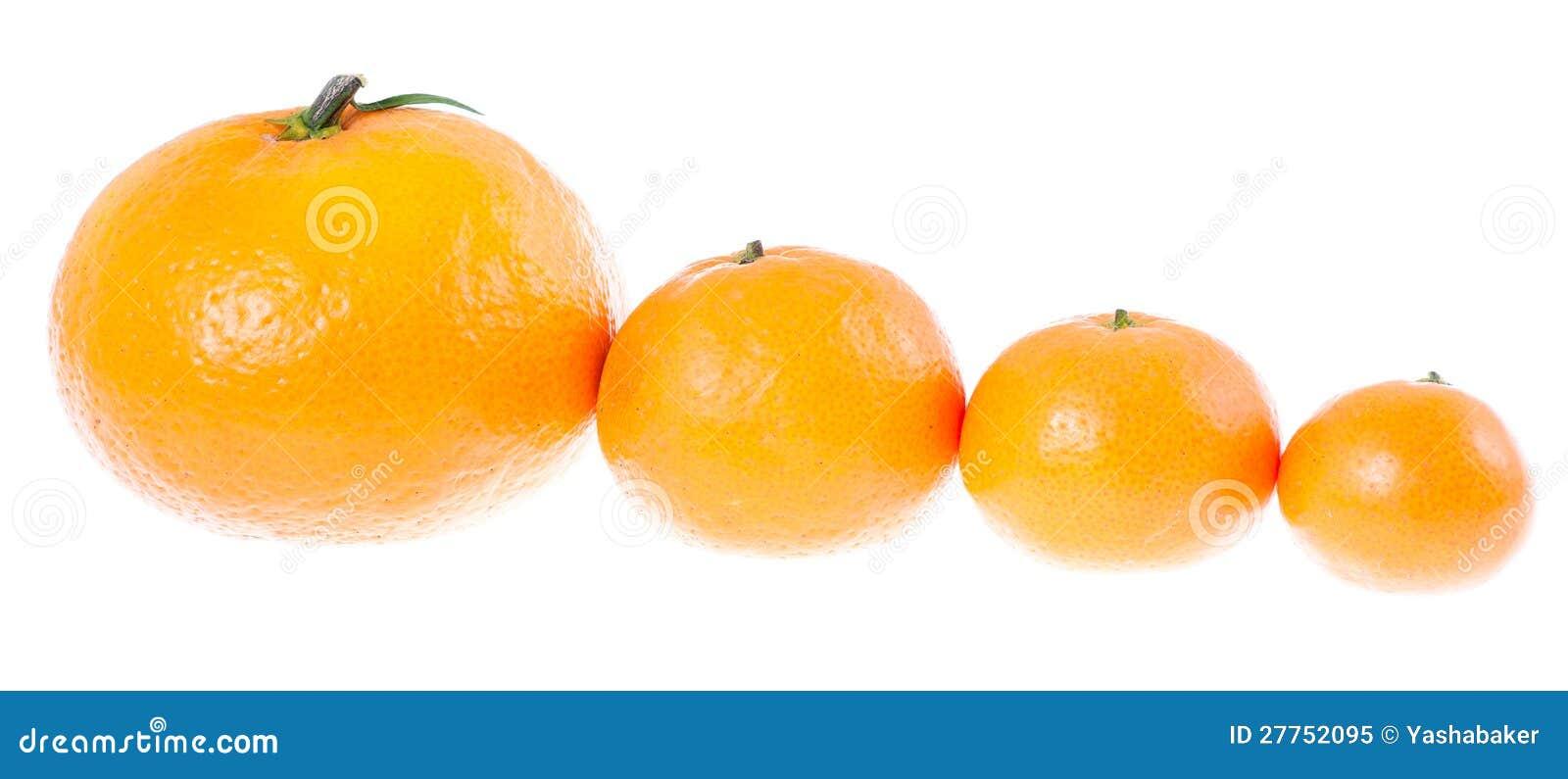 Mandarines par taille dans une ligne