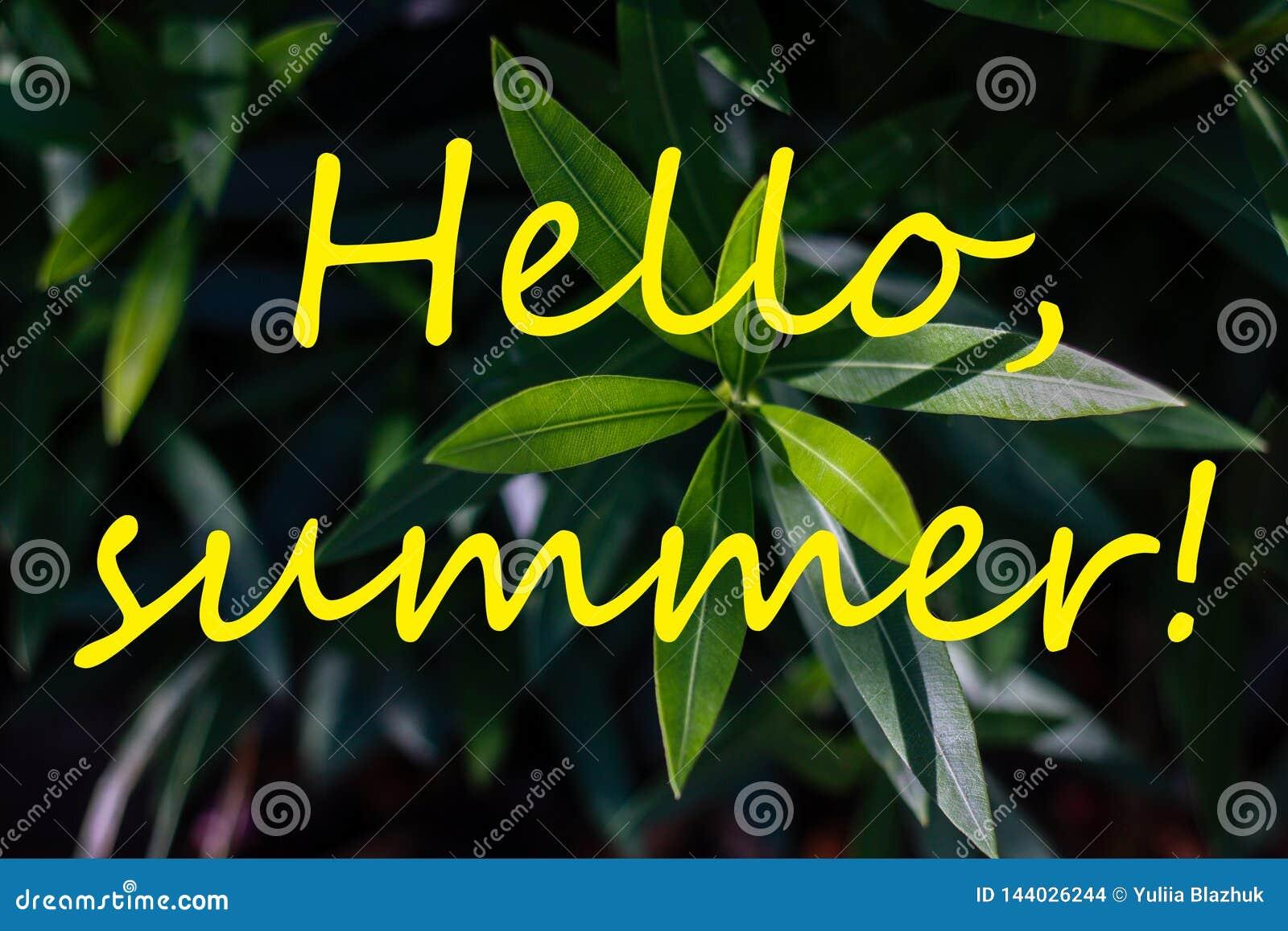 Mande un SMS HOLA al VERANO y a las hojas tropicales frescas en fondo