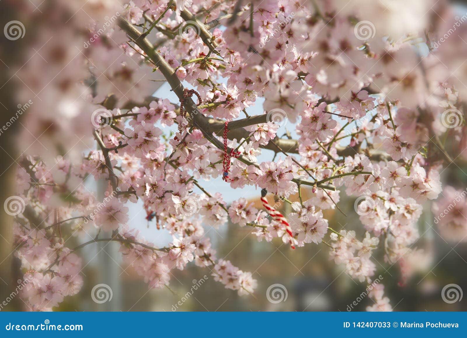 Mandelblüte im Frühjahr in Bulgarien