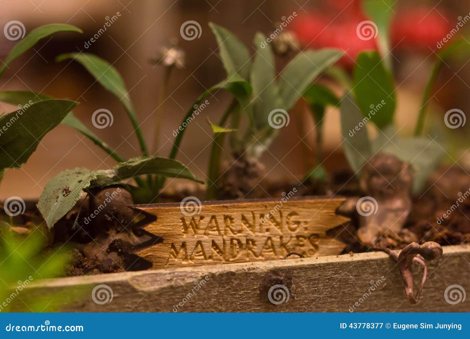 Mandrake rośliny od Harry Poter