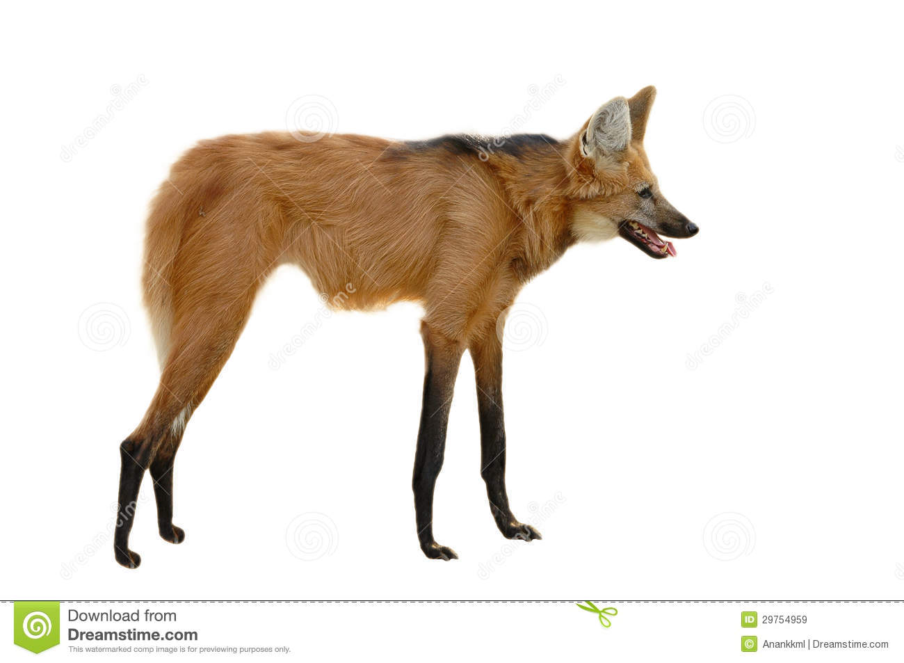 Maned Wolf Royalty Free Stock Images - Image: 29754959