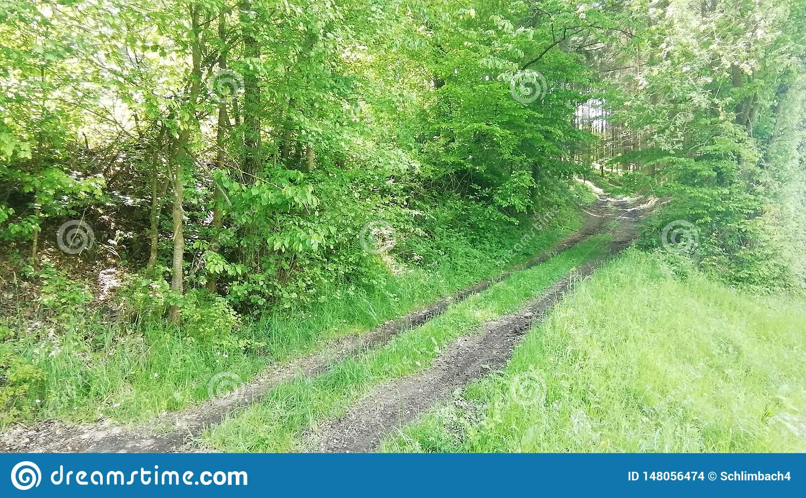 Maneira do campo da floresta no tempo de mola devido sul de Alemanha