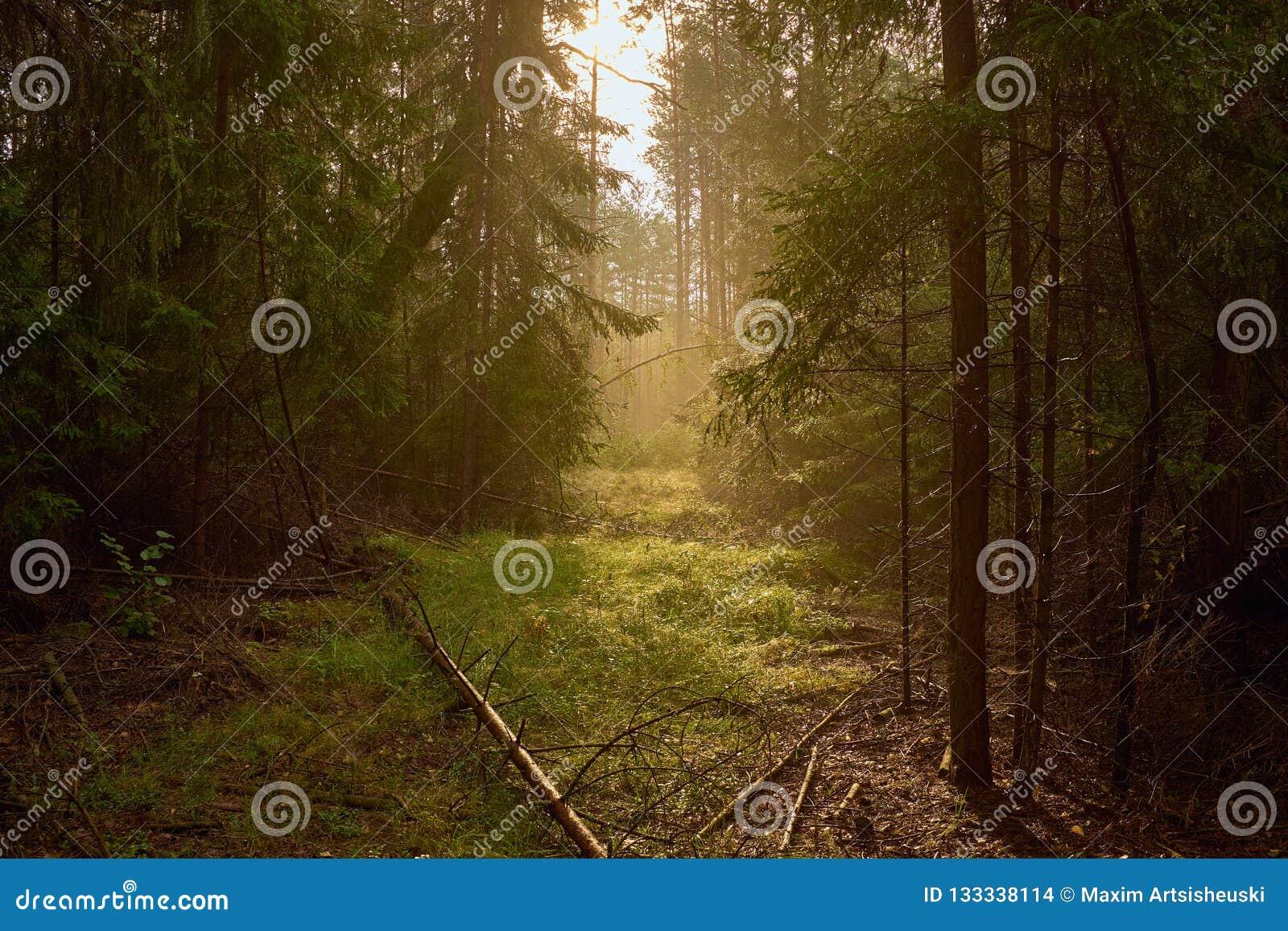 Manera hermosa entre los árboles en bosque de niebla