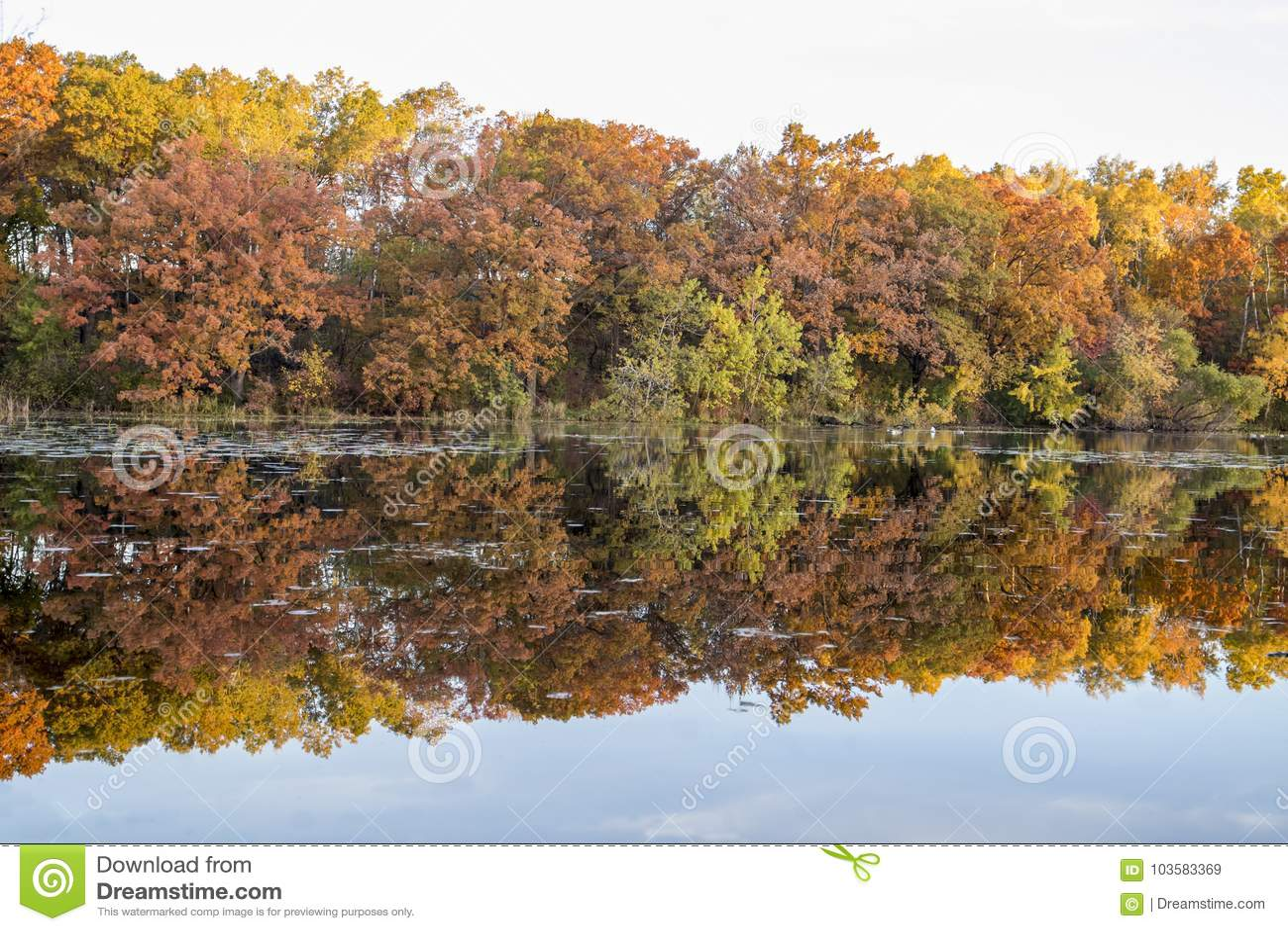 Manganèse de vallée de Jensen Lake Apple