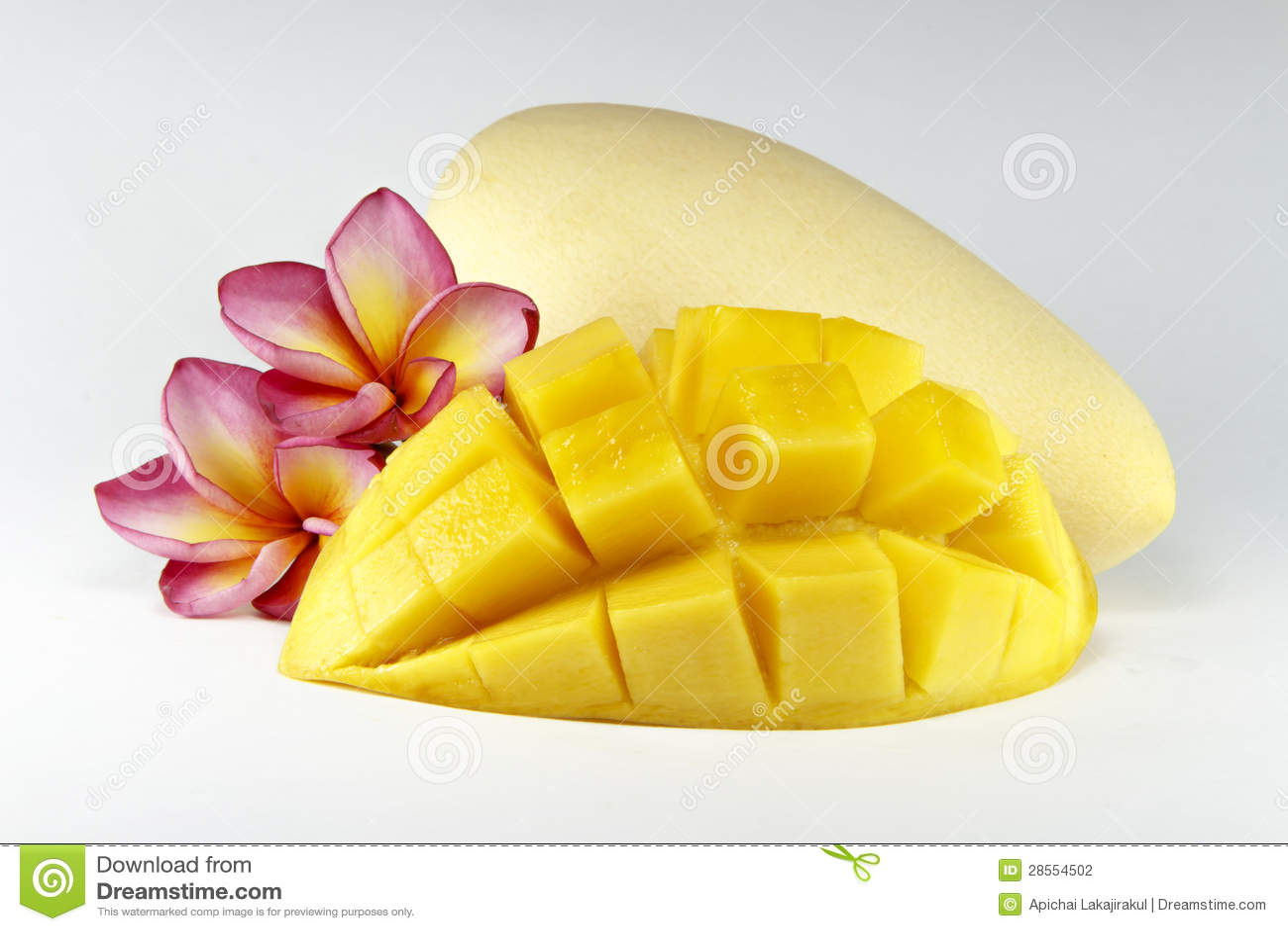 Mango orchard business plan