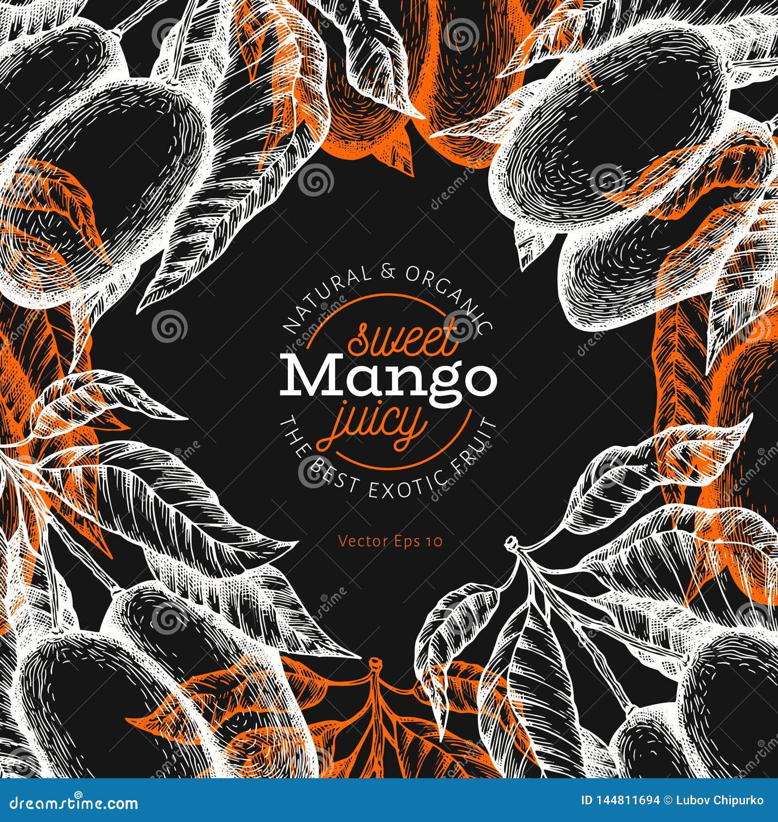 Mango design template. Hand drawn vector tropic fruit illustration on chalk board. Engraved style fruit. Vintage exotic food