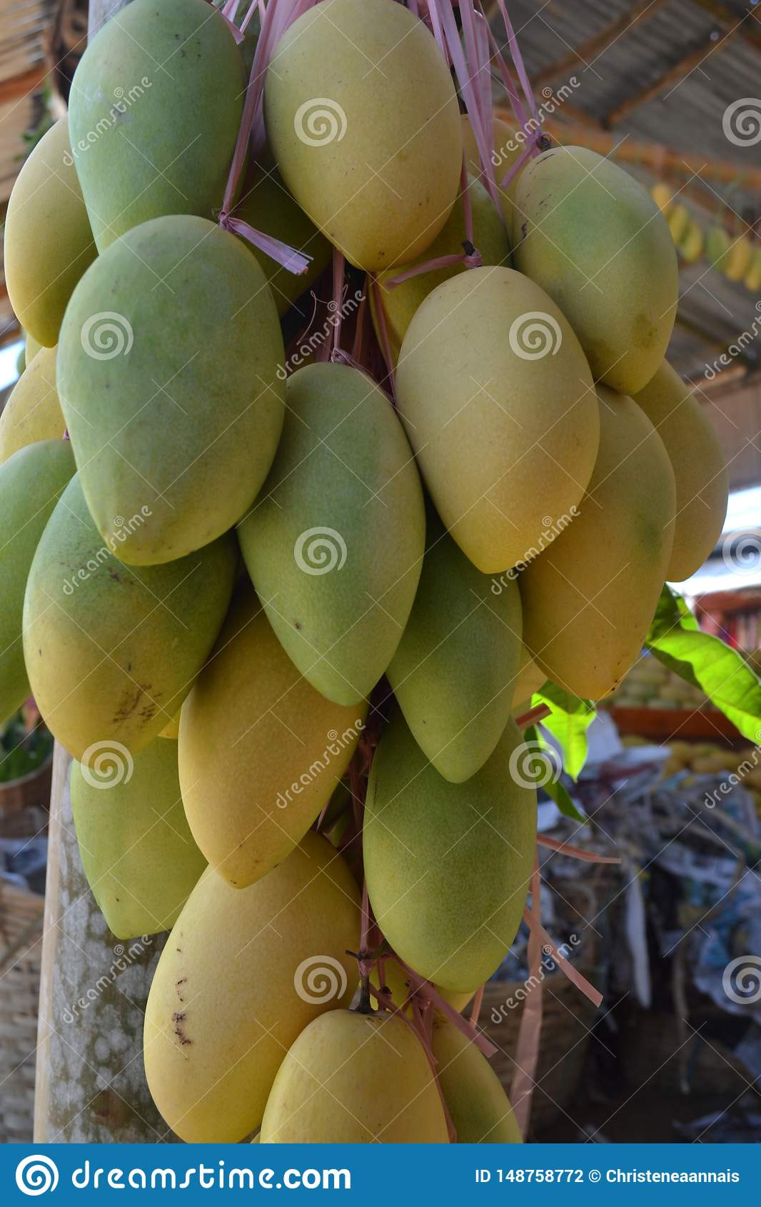 Mango, The Export Product Of The Philippines Stock Photo