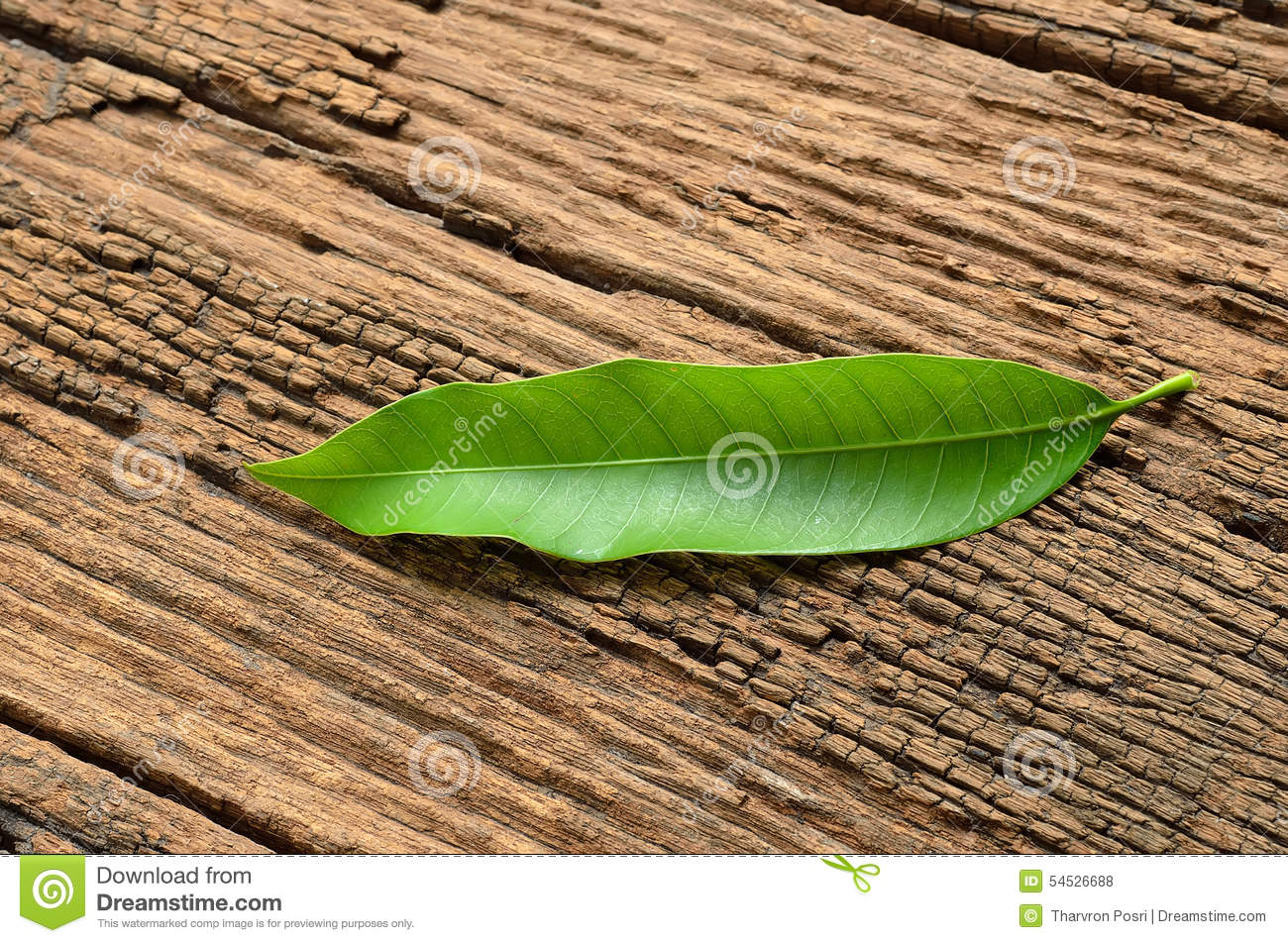 green mango leaf nature abstract background royaltyfree