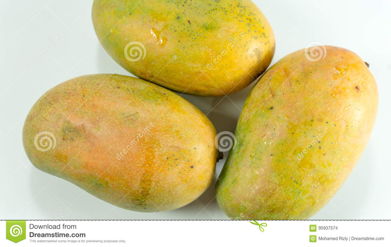 Ripe mangoes in white background
