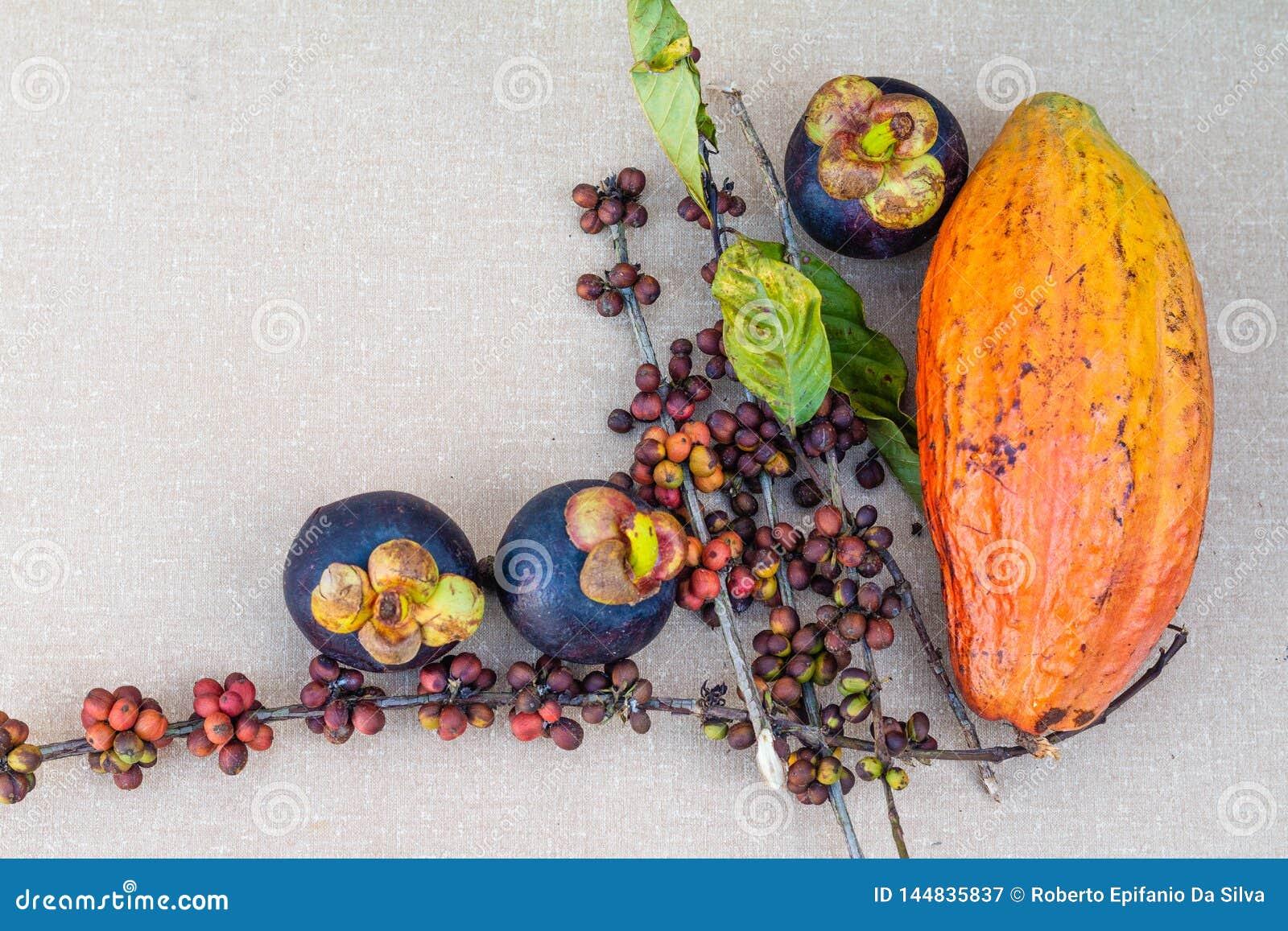 Mangostan, kawowe fasole i cacao owoc na stole,