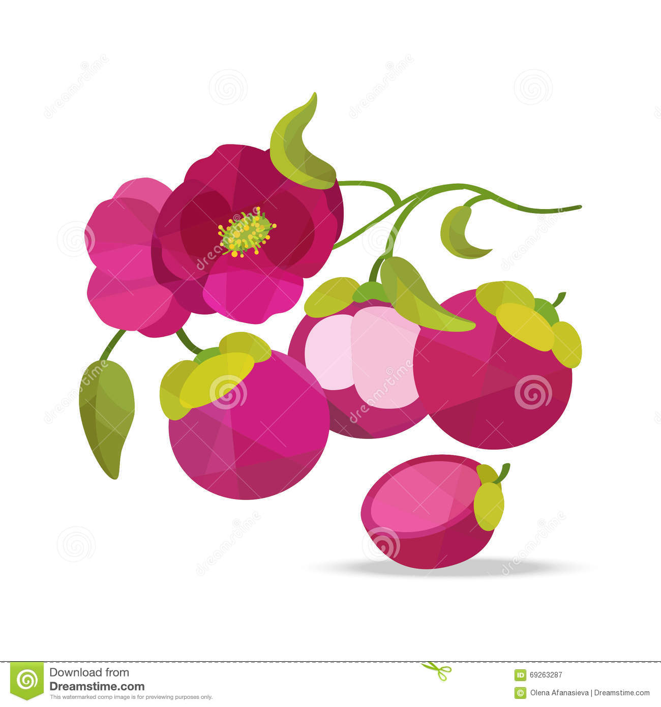 Mangosteen And Flower Vector Objects Stock Vector