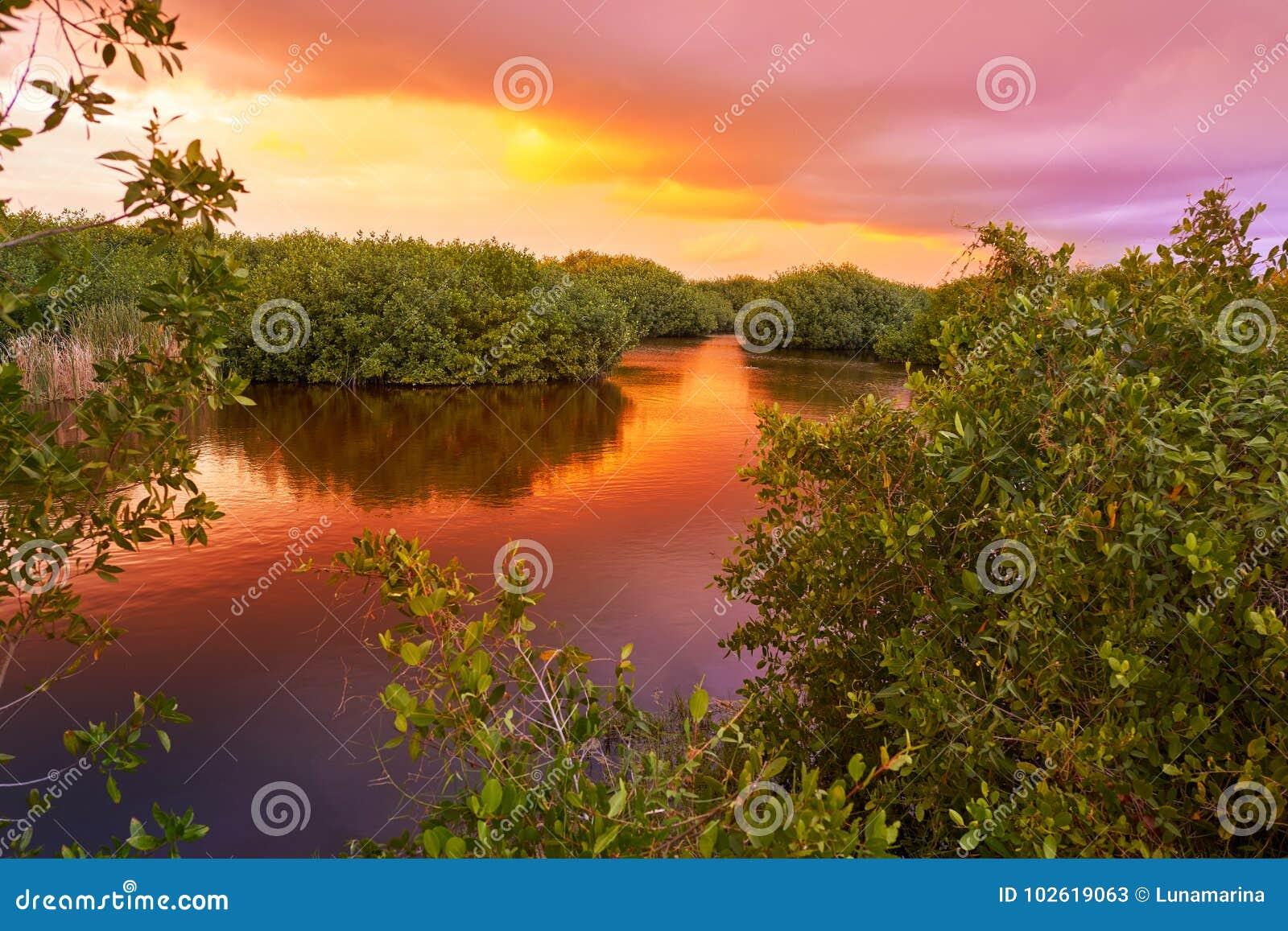 Mangroove sunset in Riviera Maya Mexico