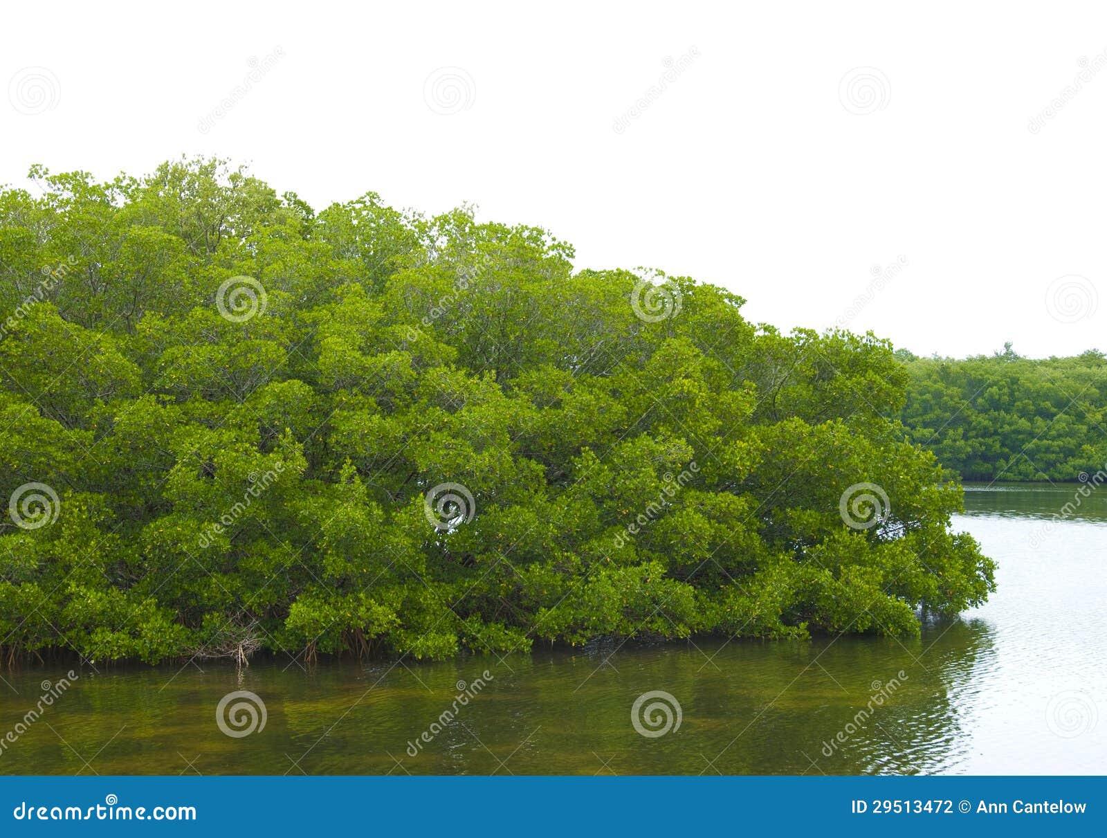 Mangrove Behandeld Eiland of Schiereiland