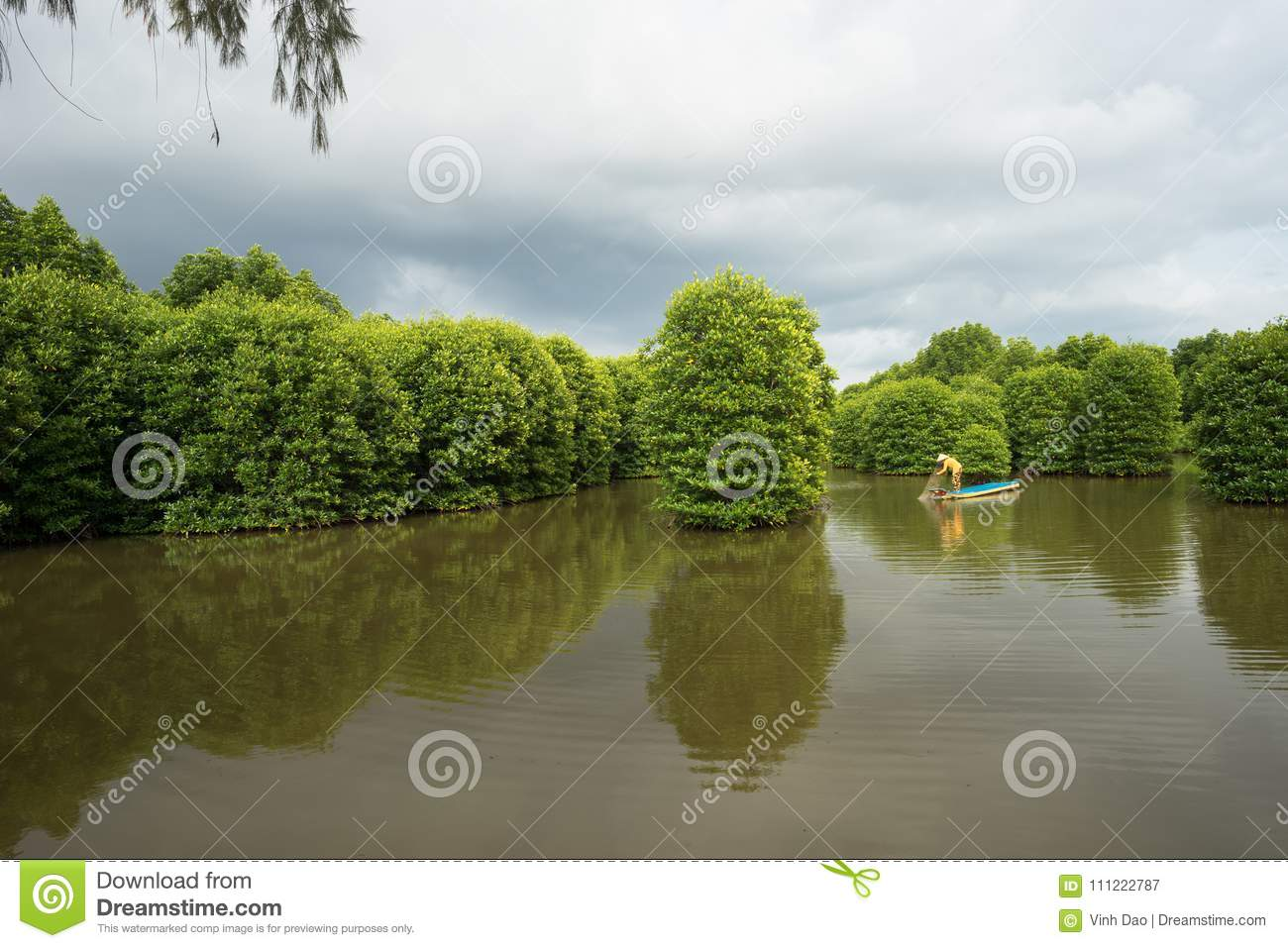 Mangrove forest with fishing boat in Ca Mau province, Mekong delta, south of Vietnam