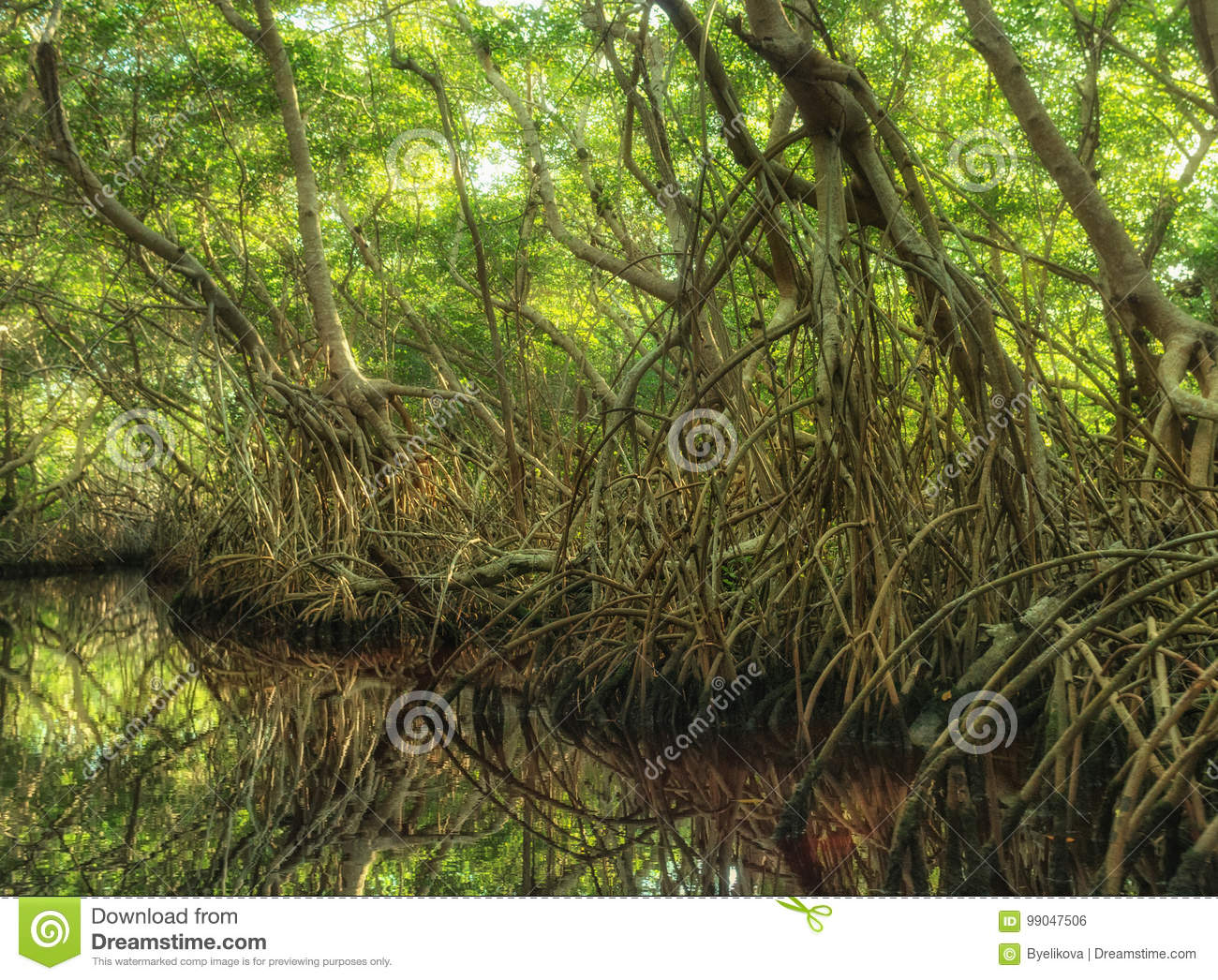 Mangrove forest in Sian Kaan, biosphere reserve, Quintana Roo, Mexico