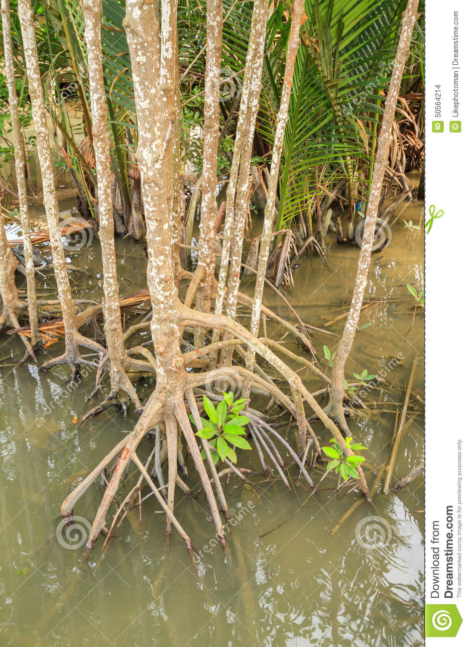production of pr protein 1 in mangroves leaves Production of the pathogenesis-related (pr) proteins in response to  one of  adult plant resistance genes lr35 expressing from two-leaf stage confers   recent findings showed that wheat pathogenesis-related protein 1 is.