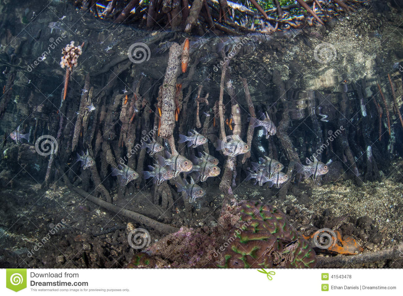 Mangrove Roots and Fish