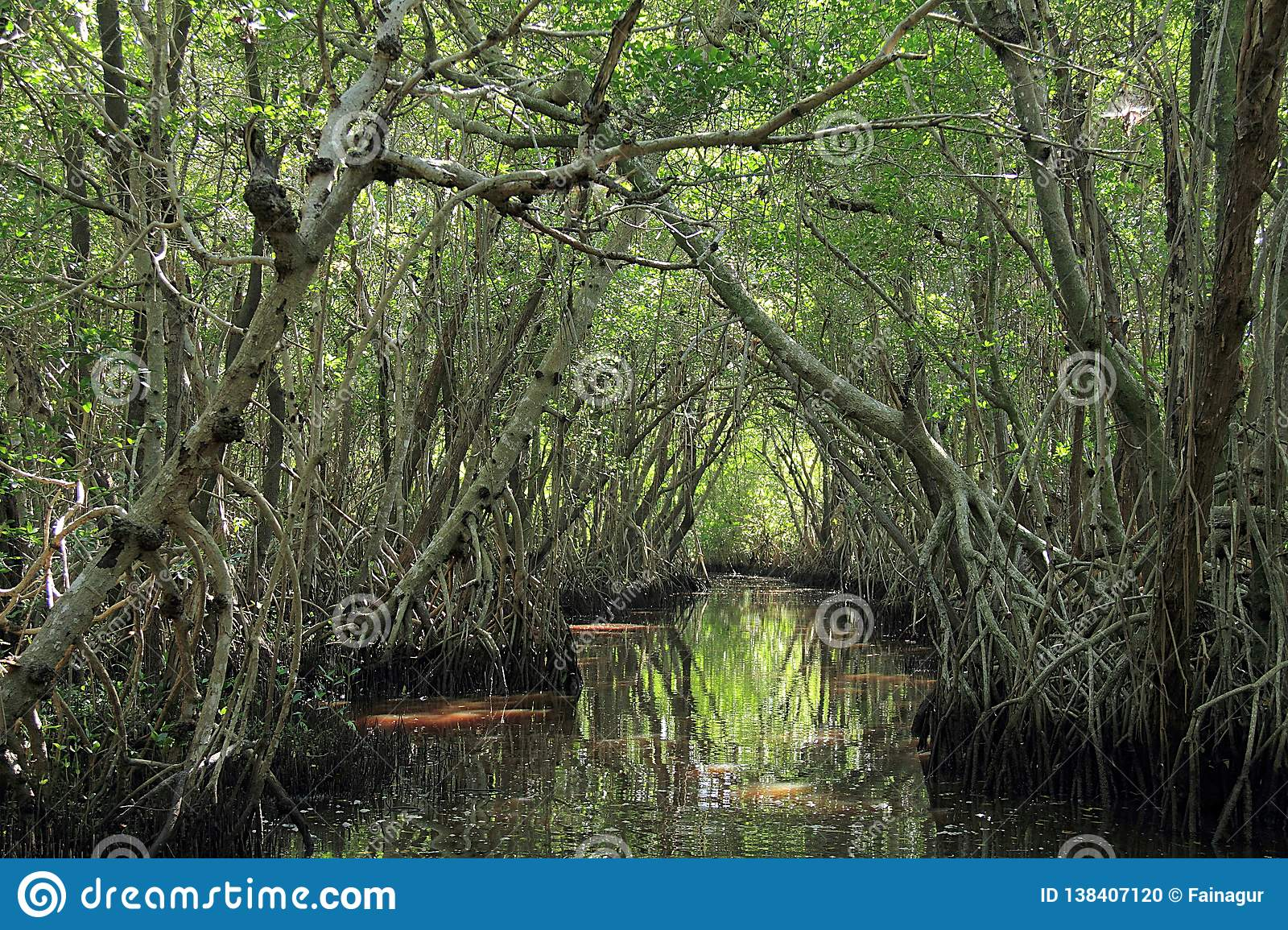Mangrove trees in Everglades National Park