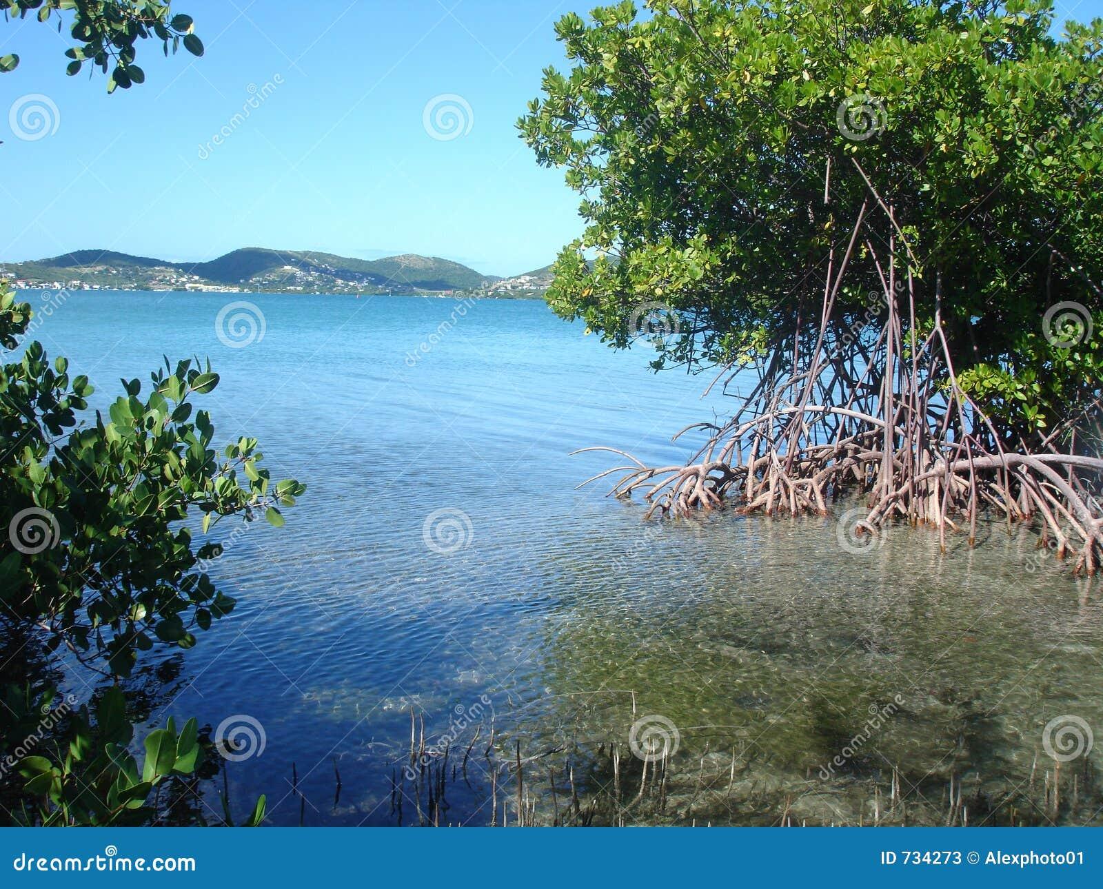 Mangrove View, Puerto Rico, Caribbean