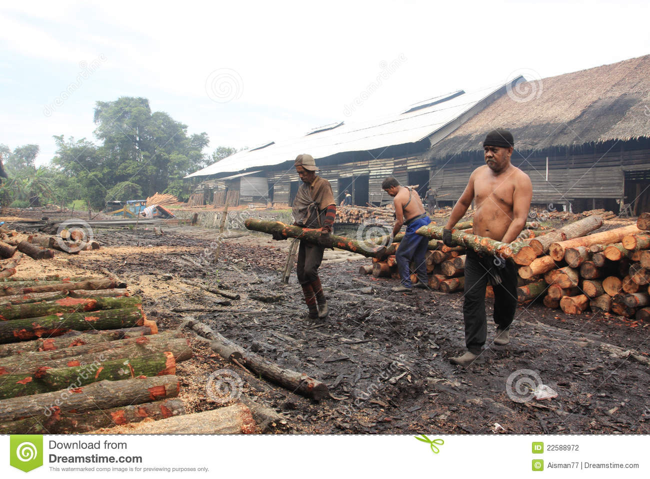 Mangrove Wood Charcoal Worker Editorial Photography - Image