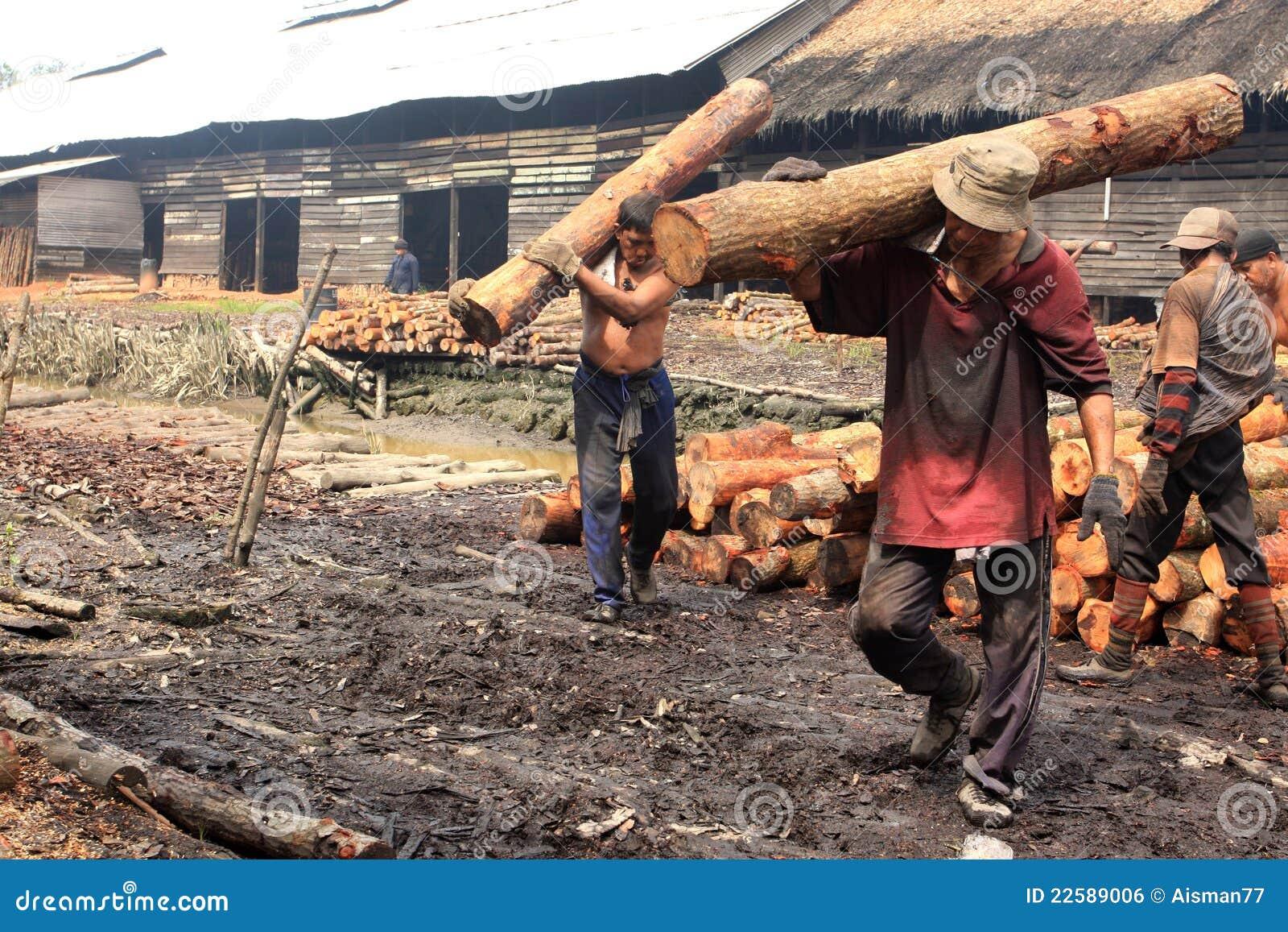 Mangrove Wood Charcoal Worker Editorial Photo - Image of dust, burn