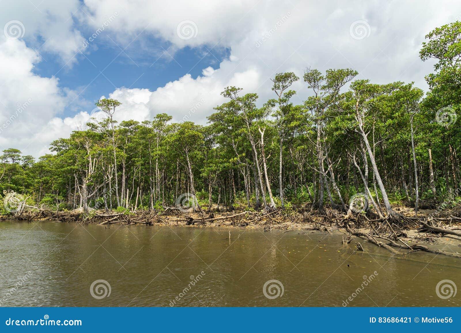 Mangrovebos van Nakama-Rivier