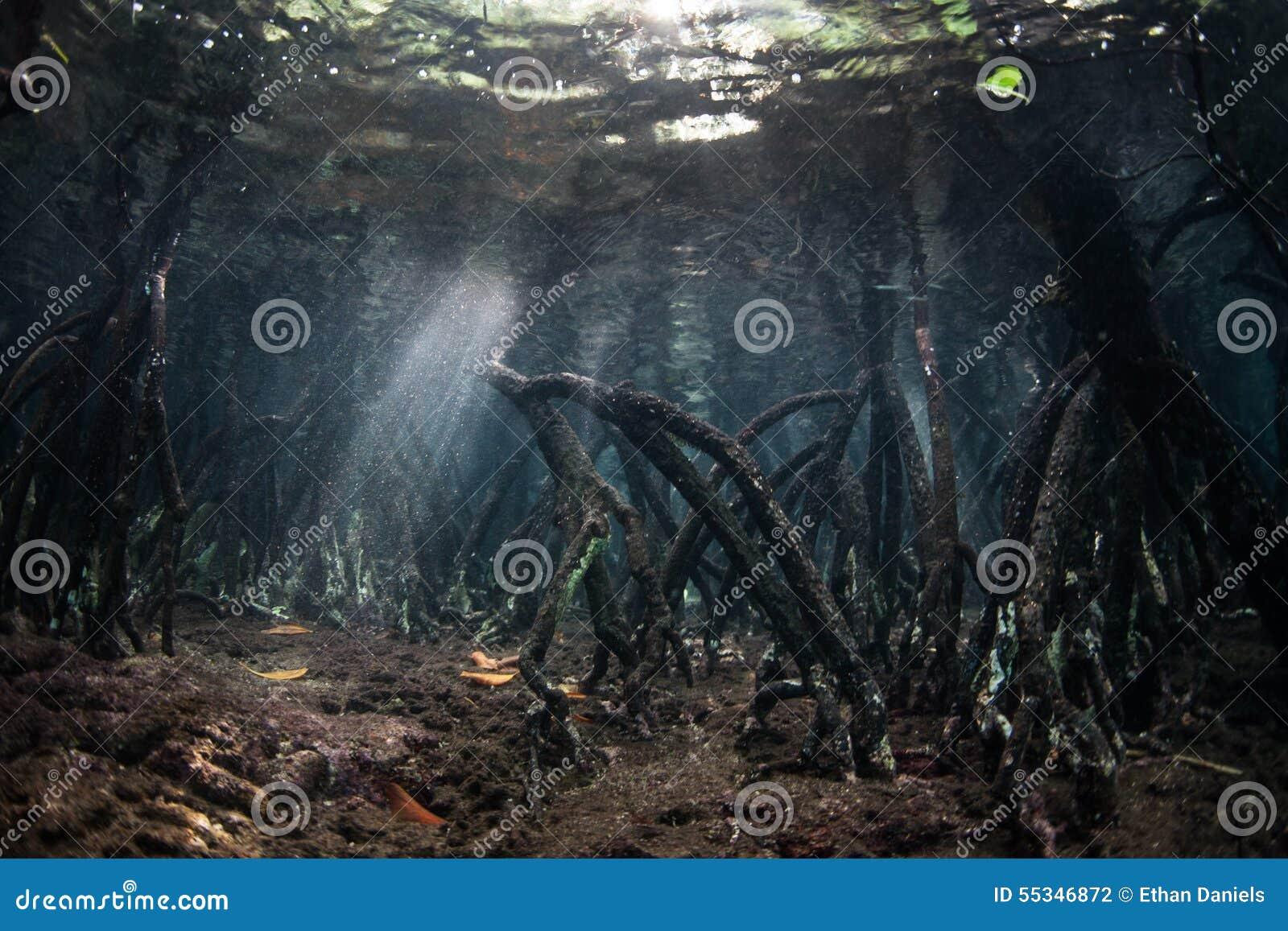 mangrovenwurzeln und sonnenlicht unterwasser stockfoto