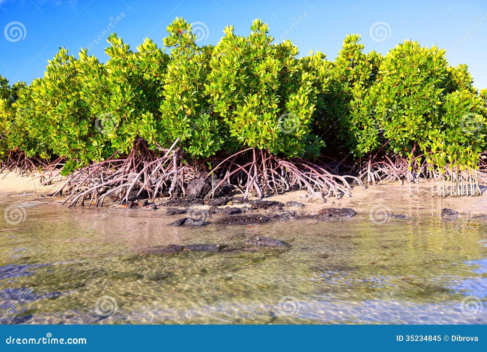 Mangrovenanlagen