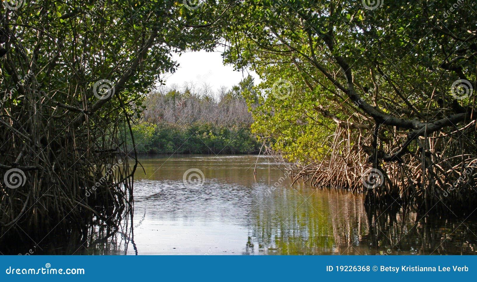 Mangroves Everglades