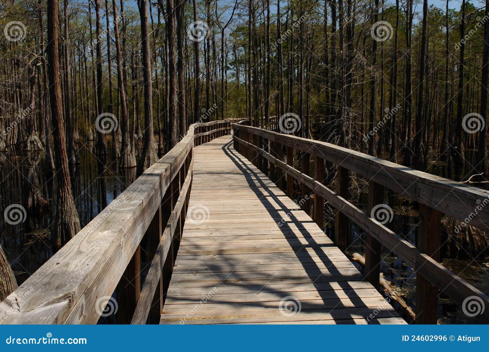 Mangrovie della Florida