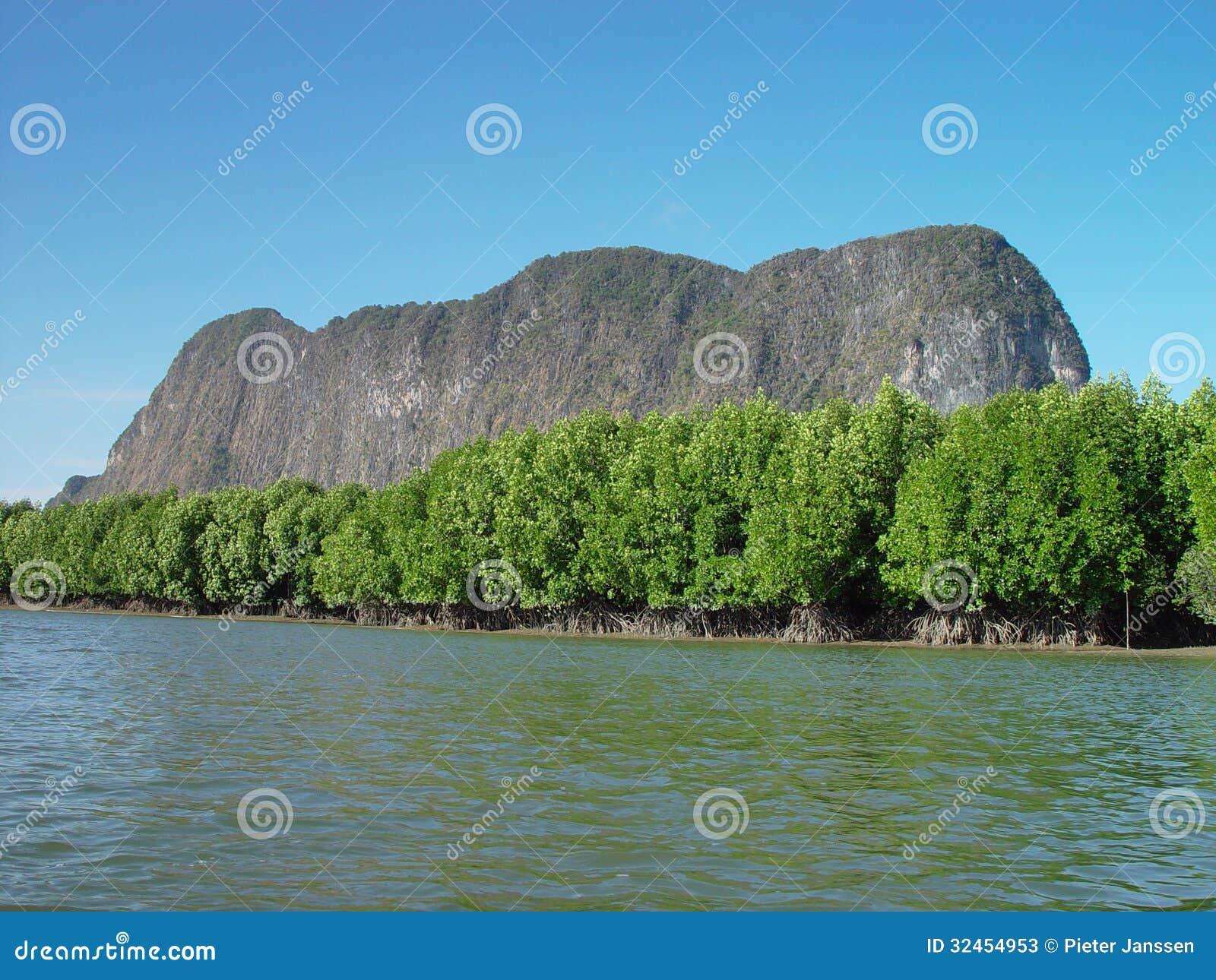 Mangrovie in Tailandia