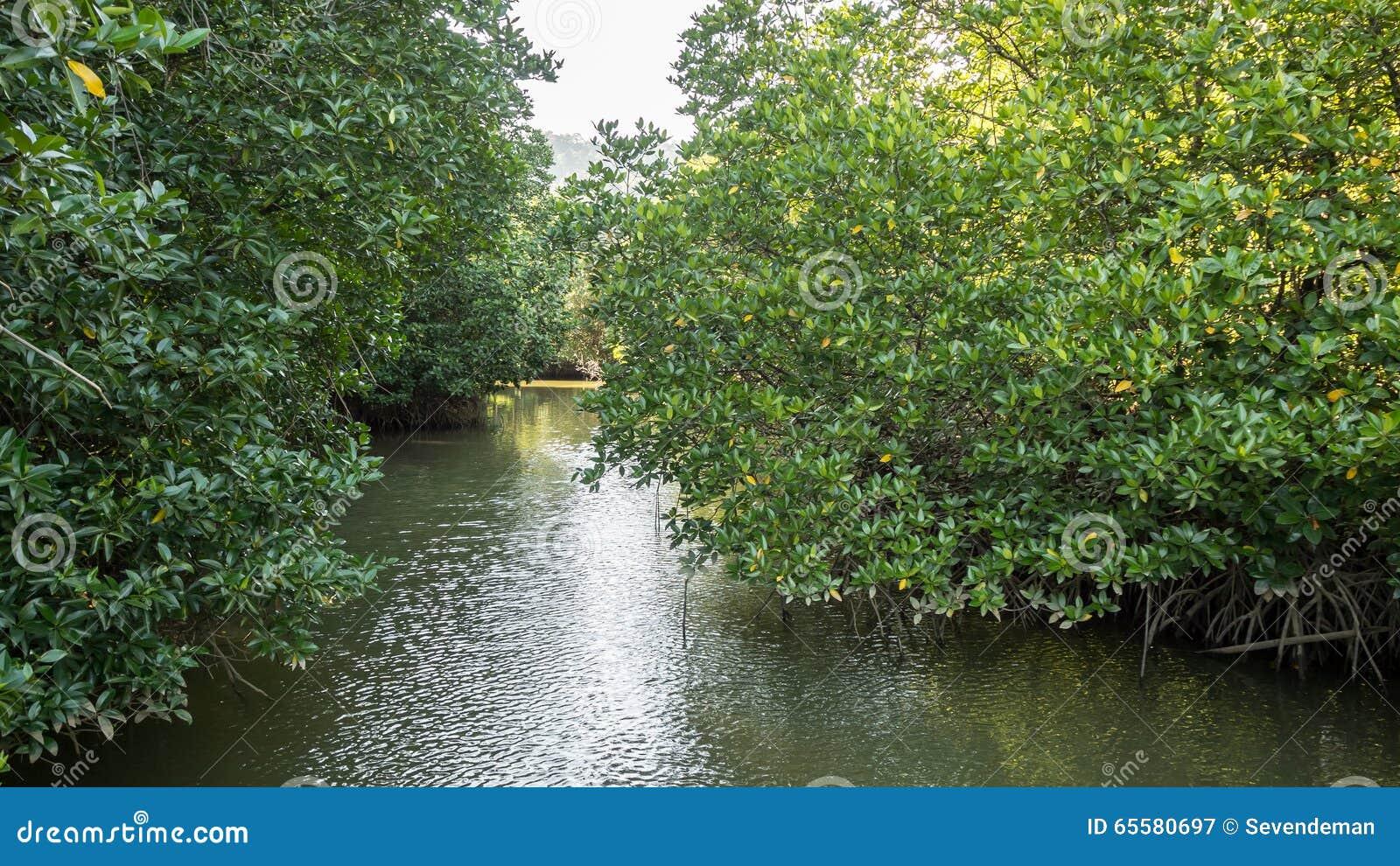 Manguezais em Tailândia