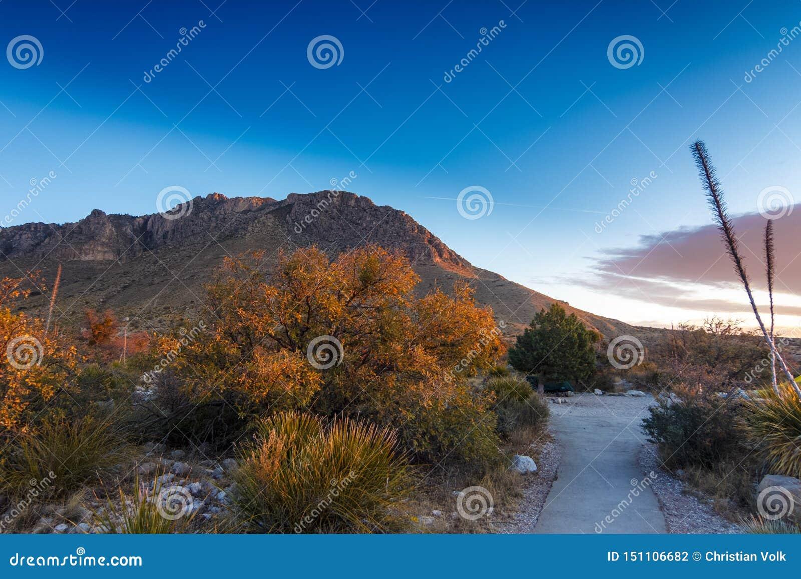 Manhã bonita em Guadalupe Mountains National Park