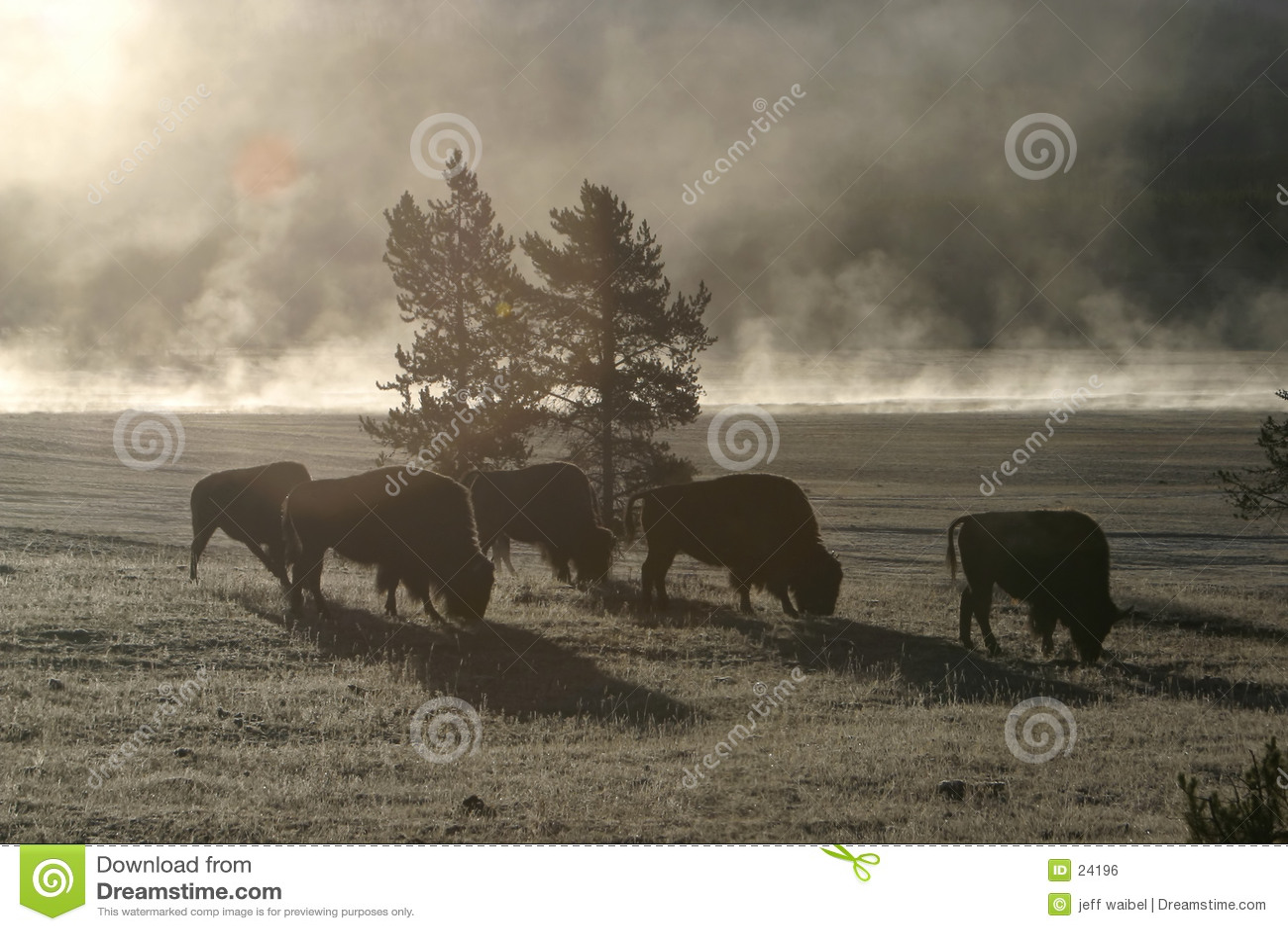 Manhã do búfalo